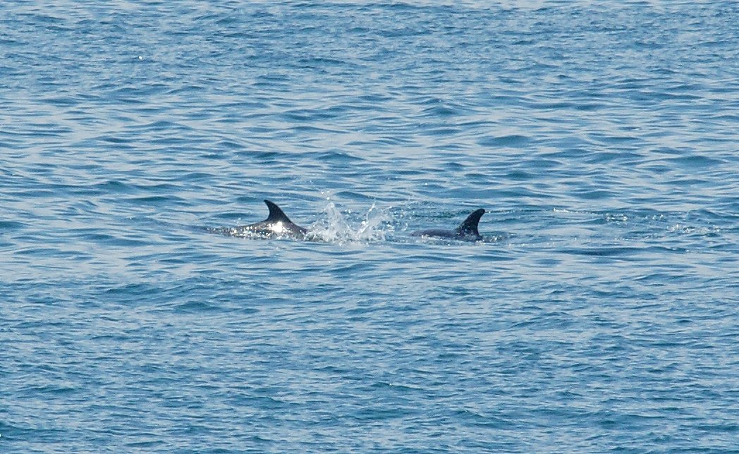 Sea-Life-Dolphins-Gallery01
