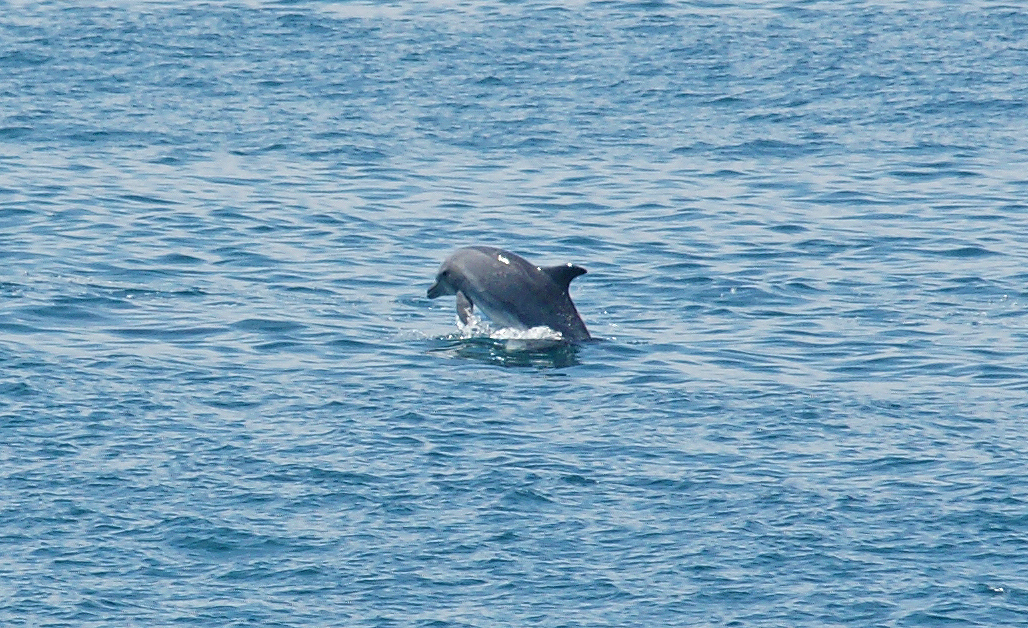 Sea-Life-Dolphins-Gallery02