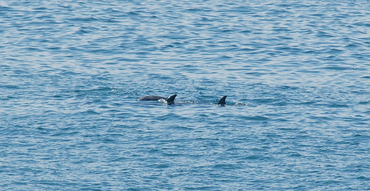 Sea-Life-Dolphins-Gallery03