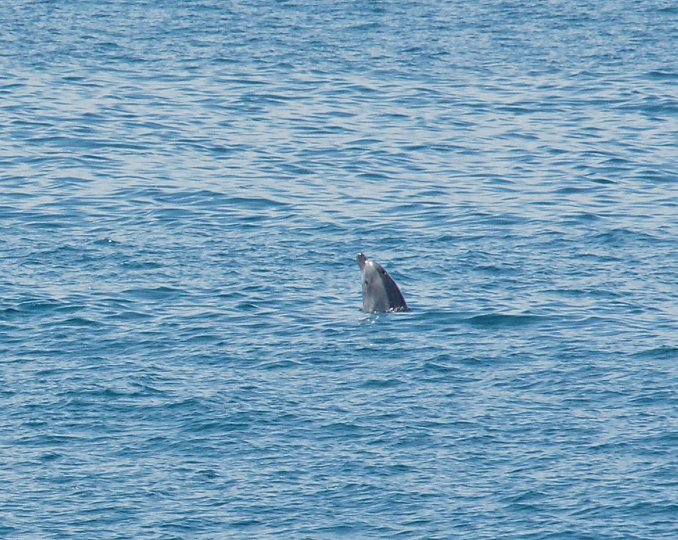 Sea-Life-Dolphins-Gallery04
