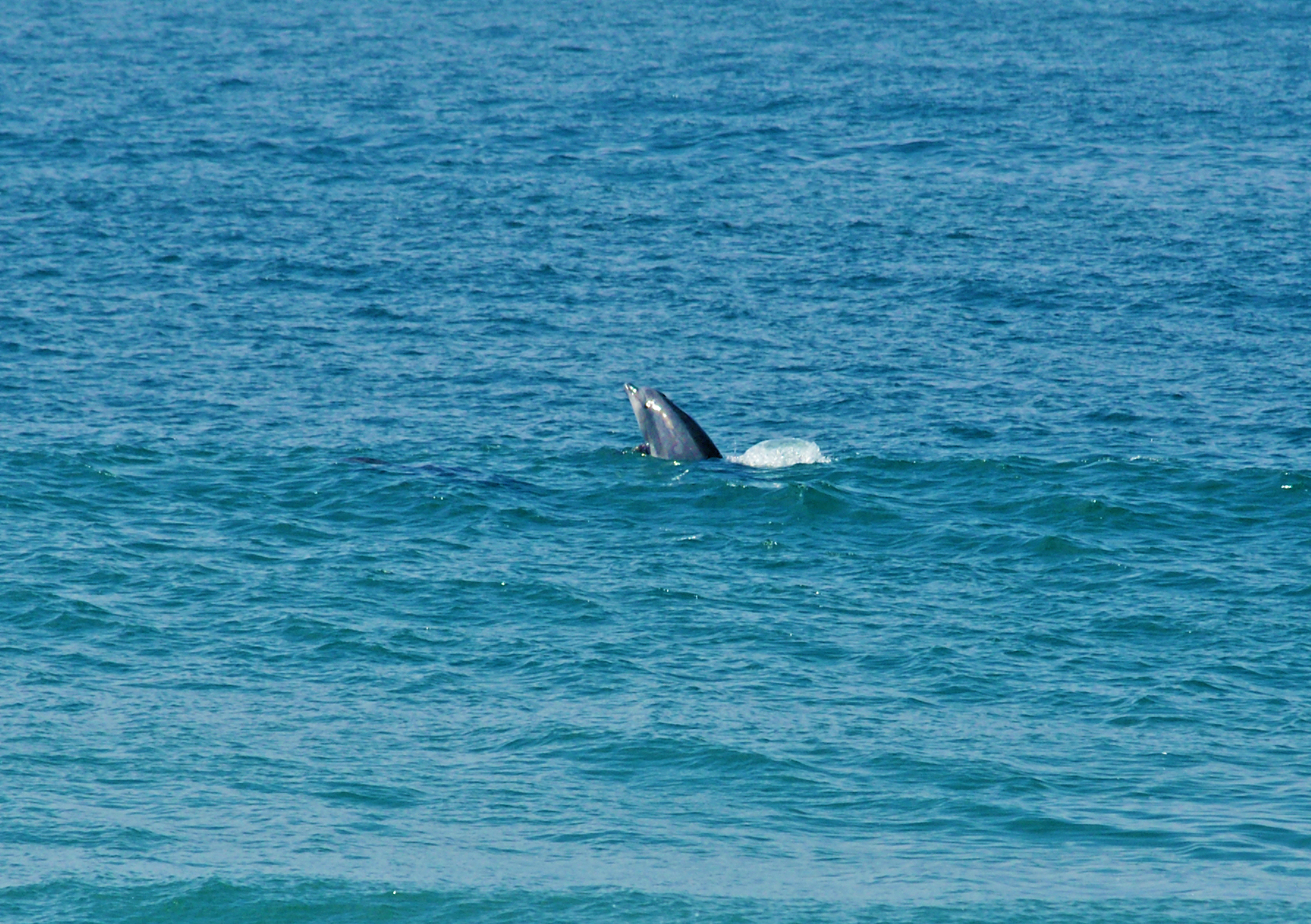 Sea-Life-Dolphins-Gallery07