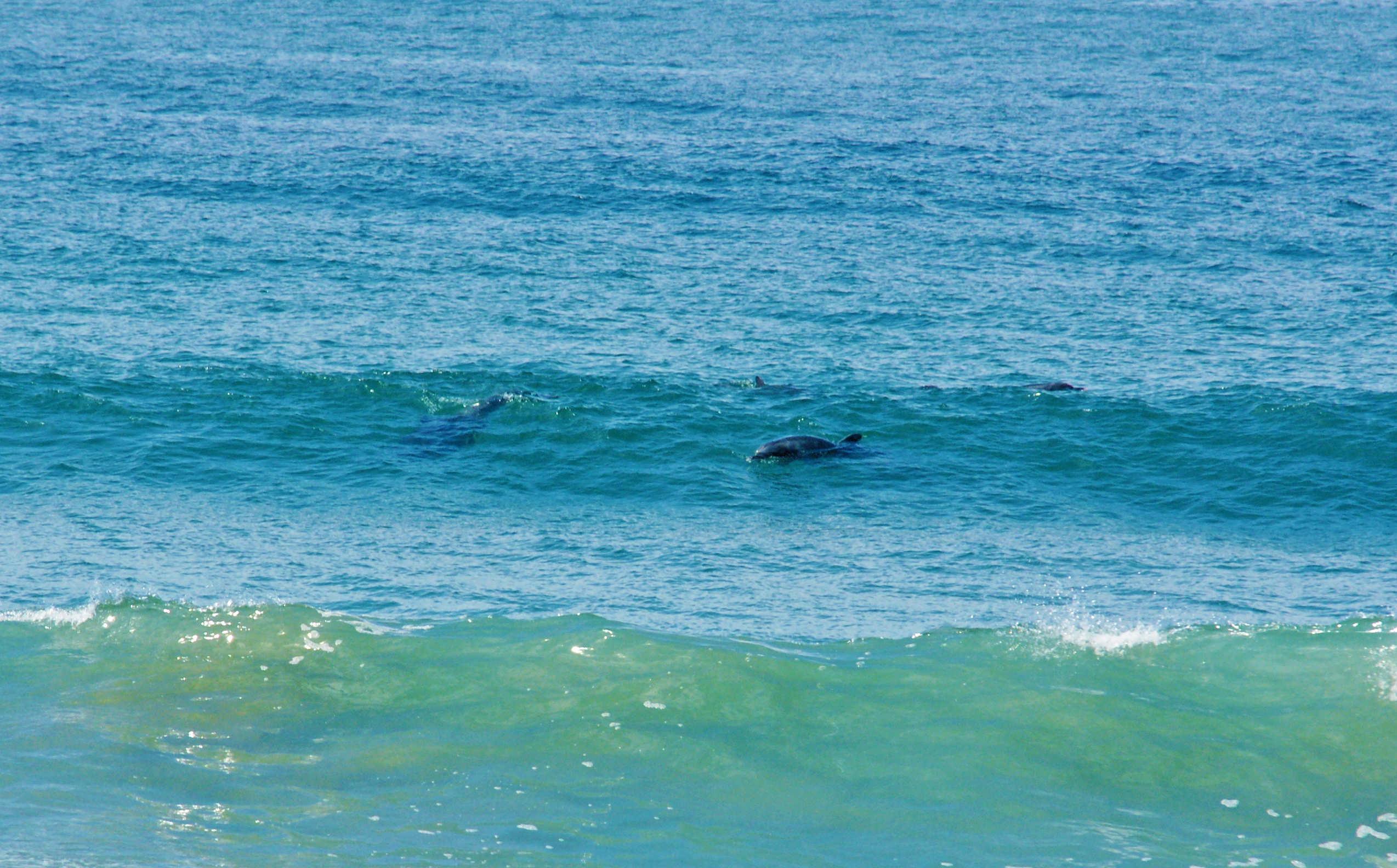 Sea-Life-Dolphins-Gallery10