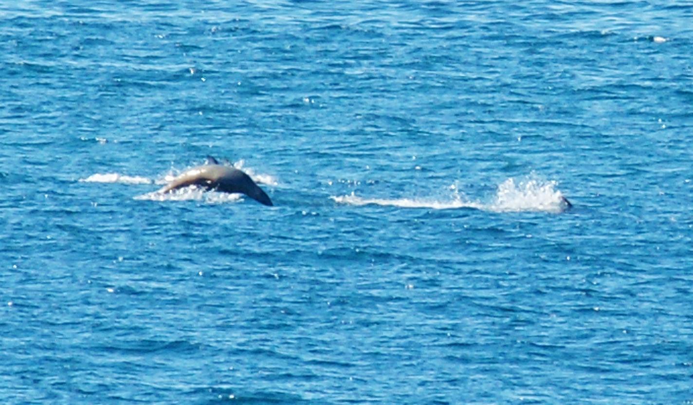 Sea-Life-Sea-Lions-Gallery02