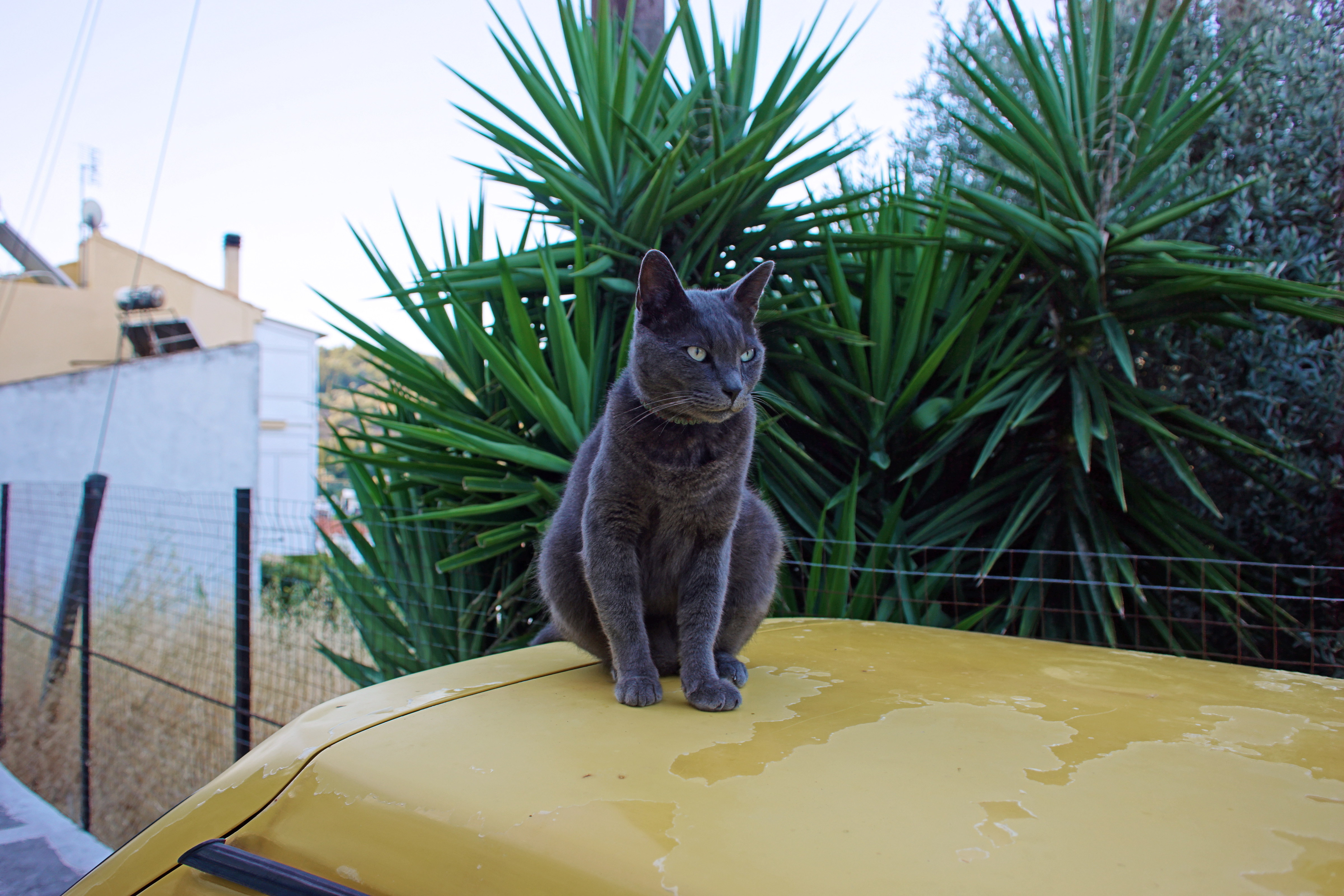 Samos-Greek-Cats01