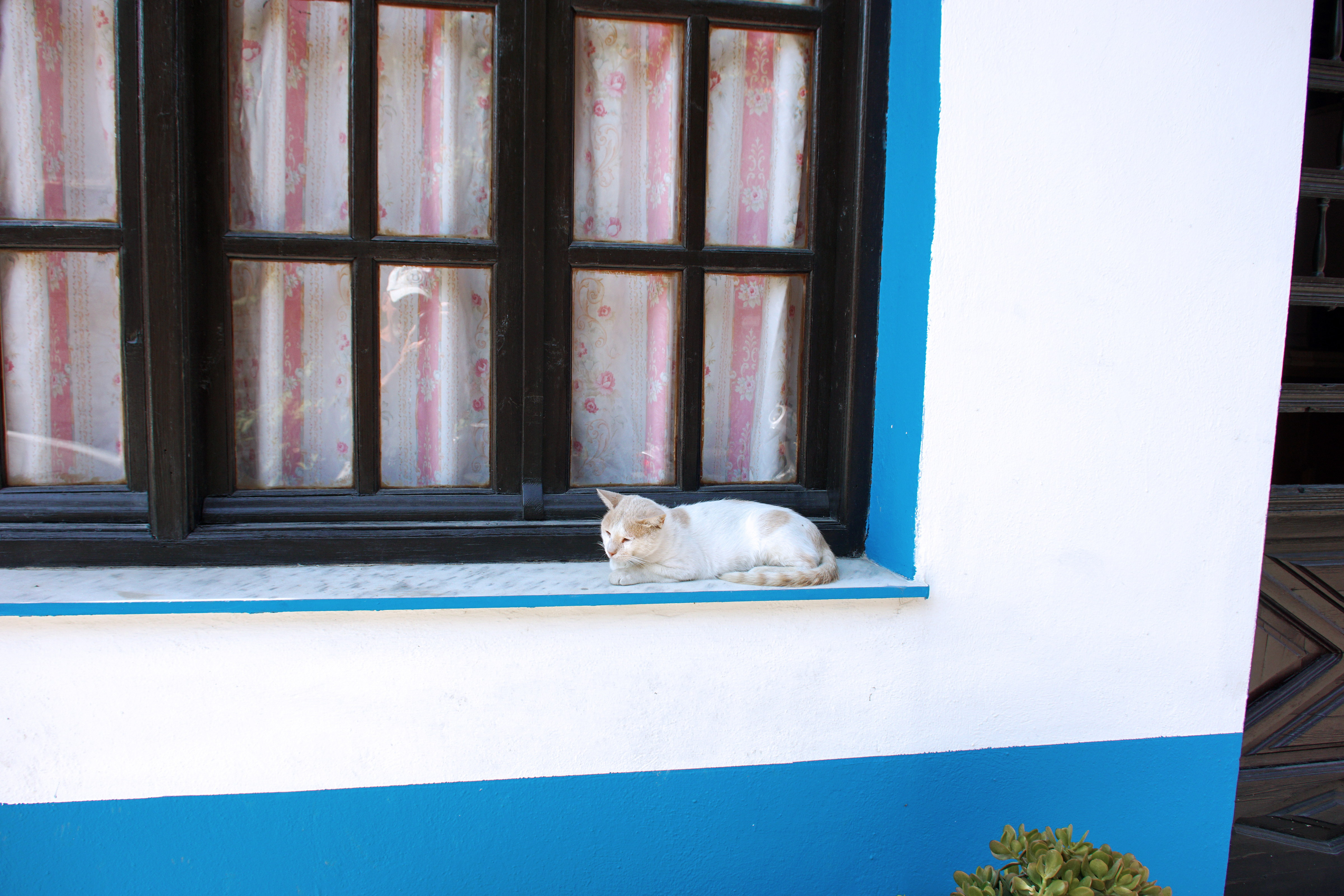 Samos-Greek-Cats06