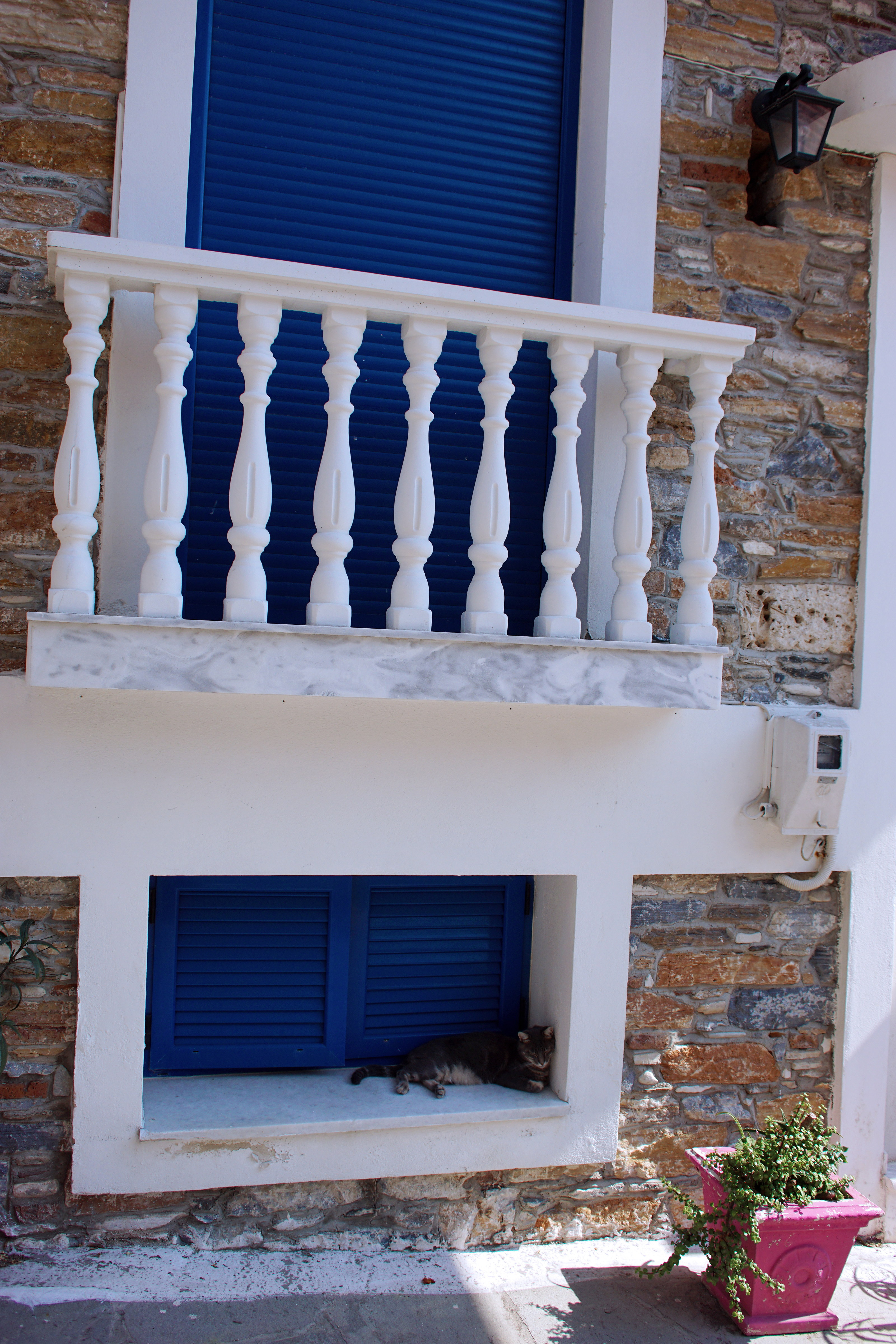 Samos-Greek-Cats09