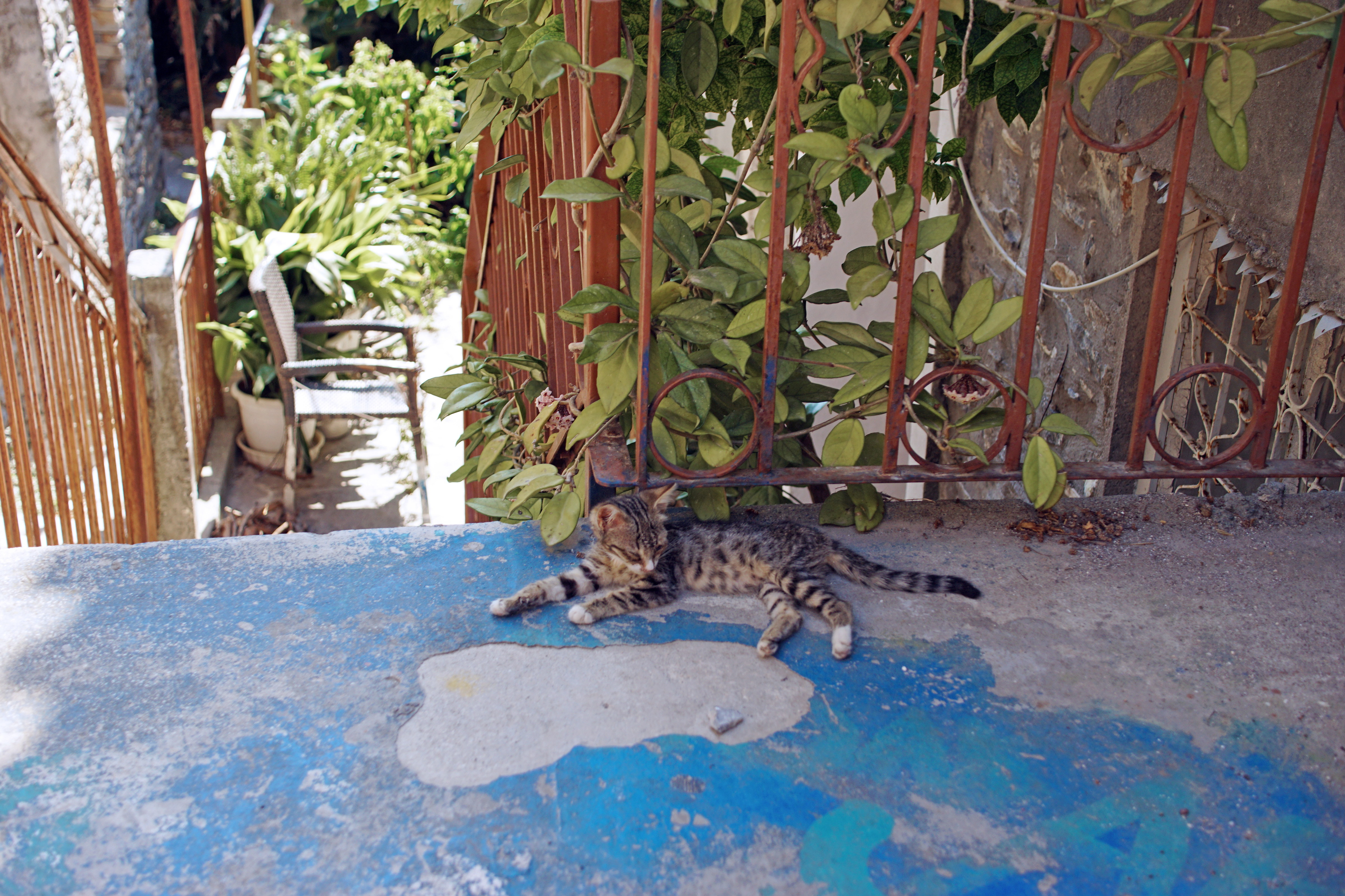 Samos-Greek-Cats11