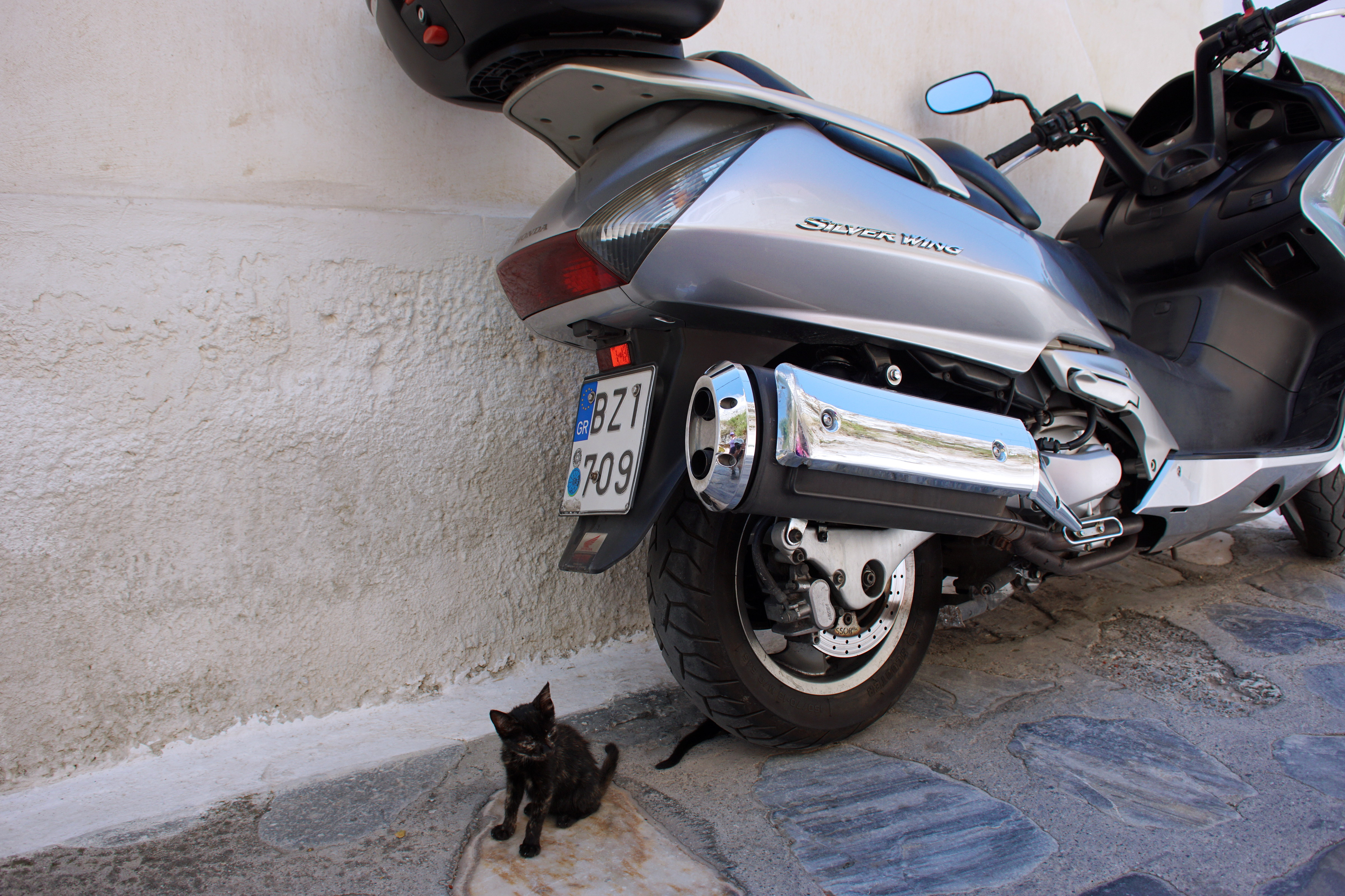 Samos-Greek-Cats12