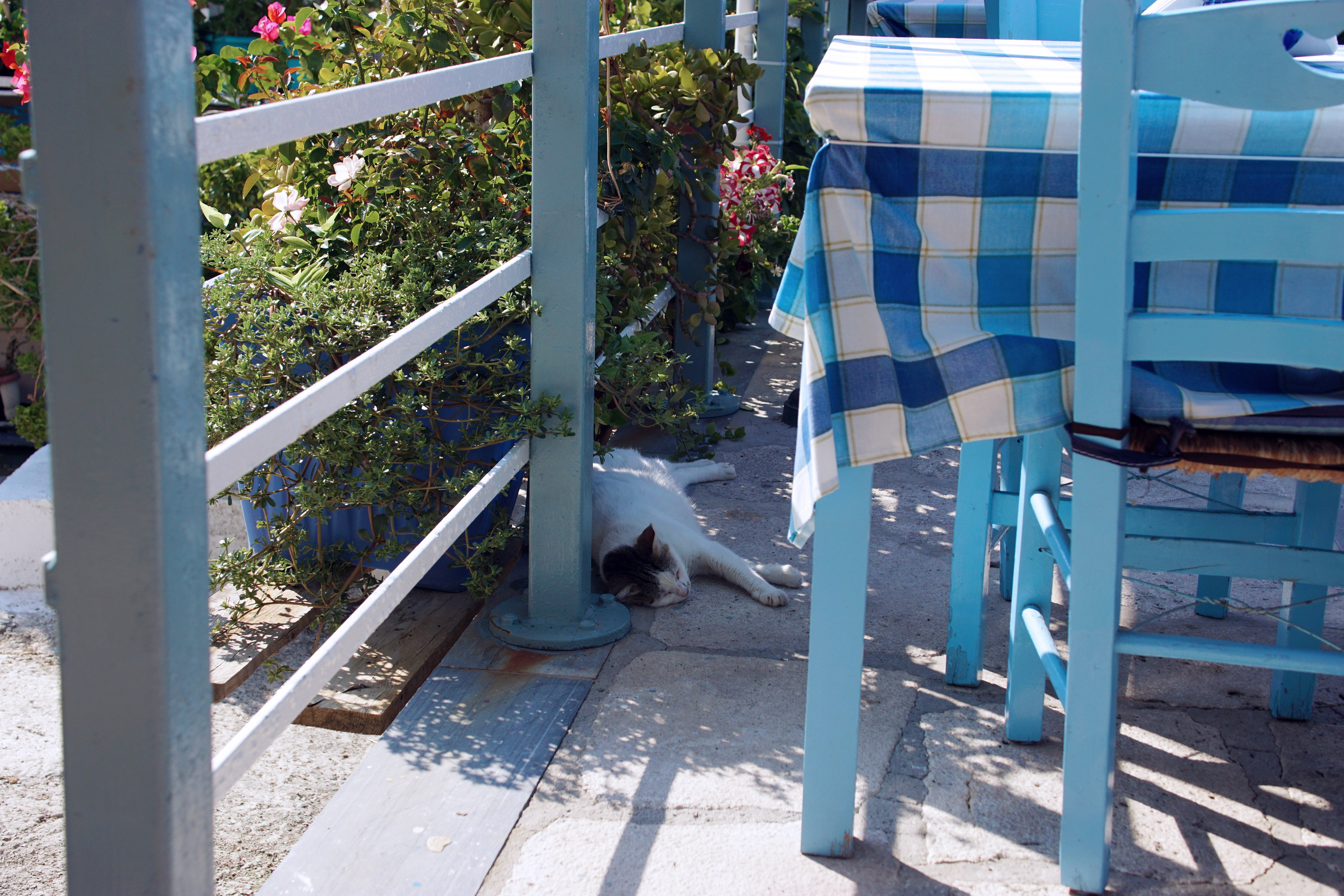 Samos-Greek-Cats13
