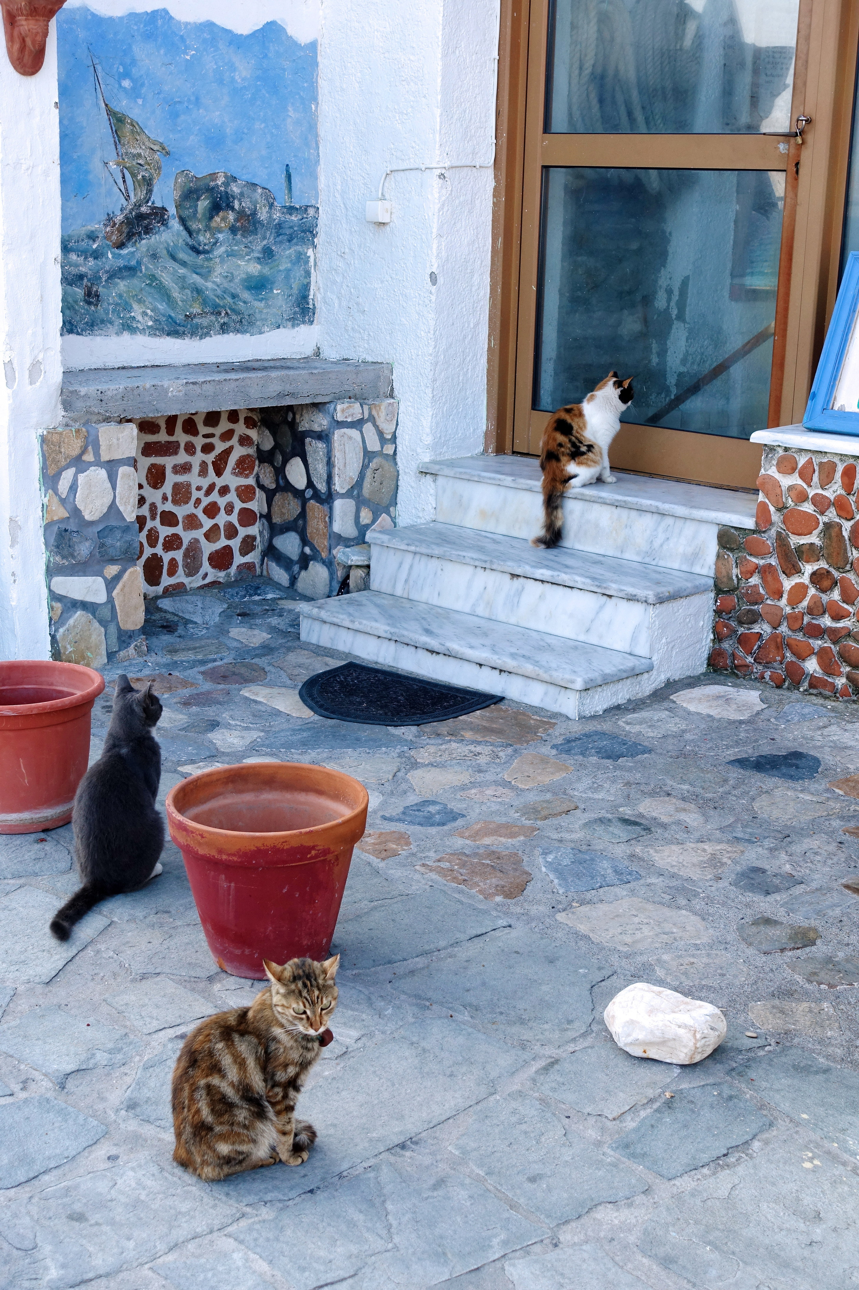 Samos-Greek-Cats17