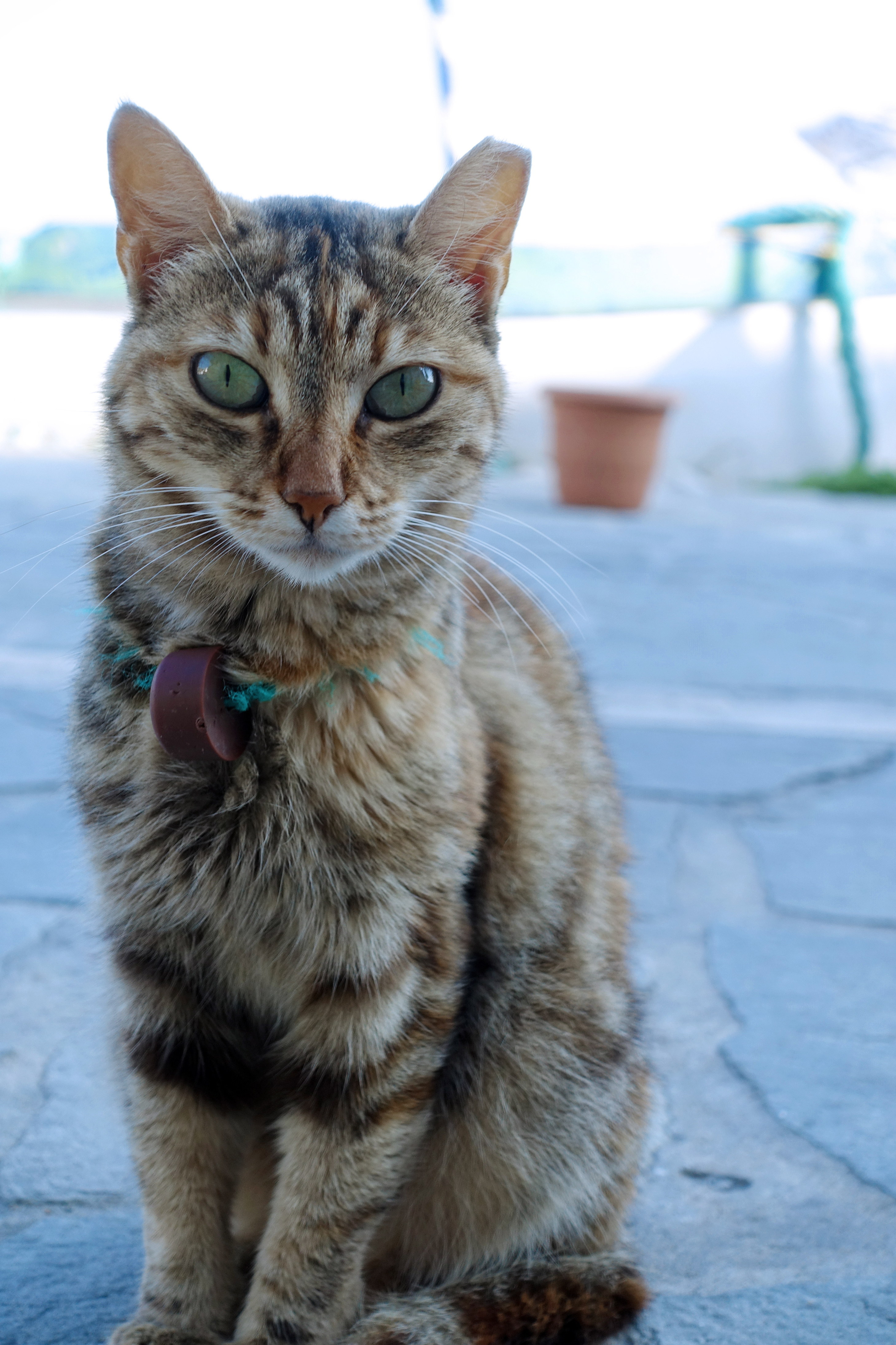Samos-Greek-Cats19