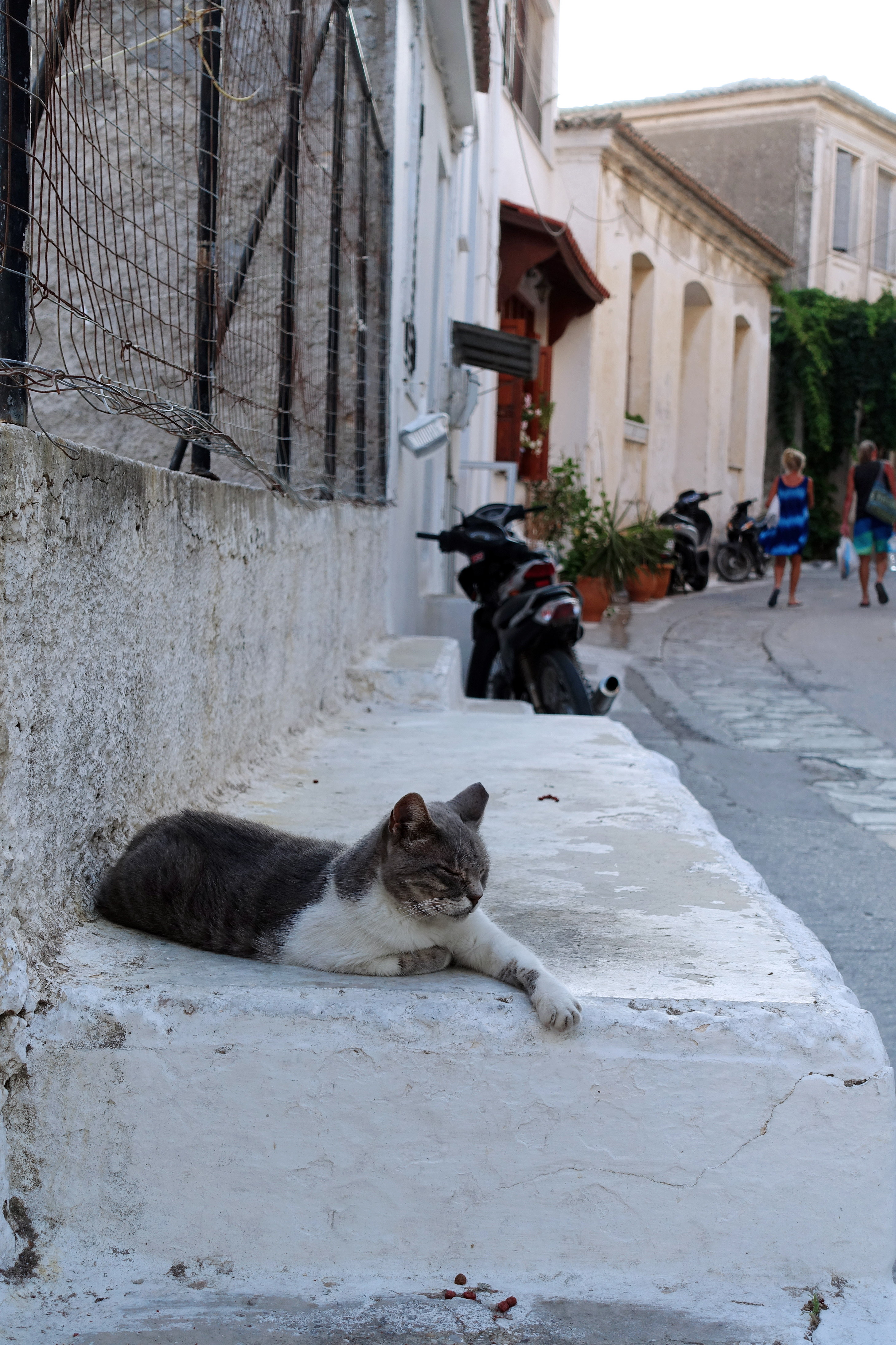 Samos-Greek-Cats22