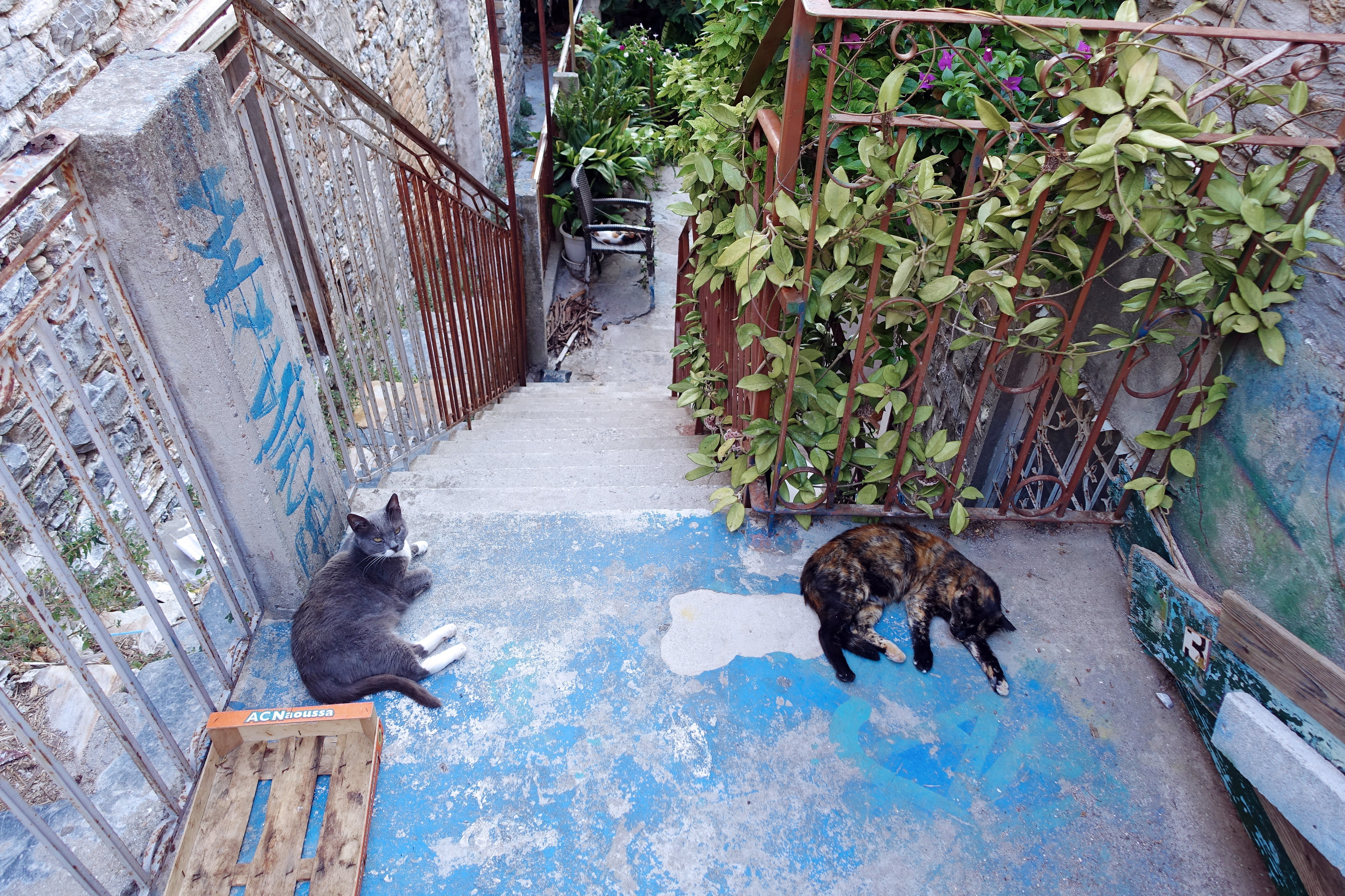 Samos-Greek-Cats26