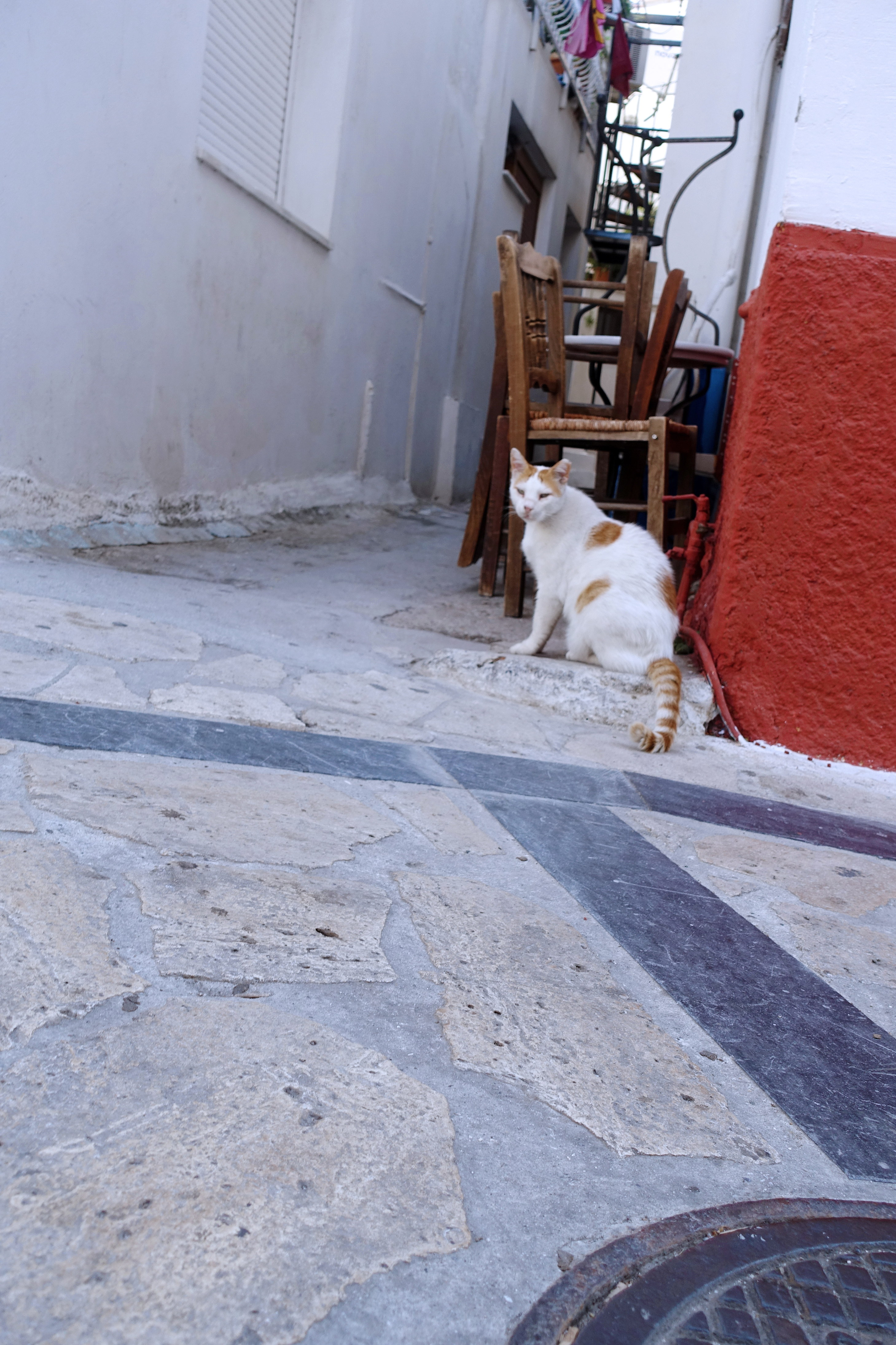 Samos-Greek-Cats35