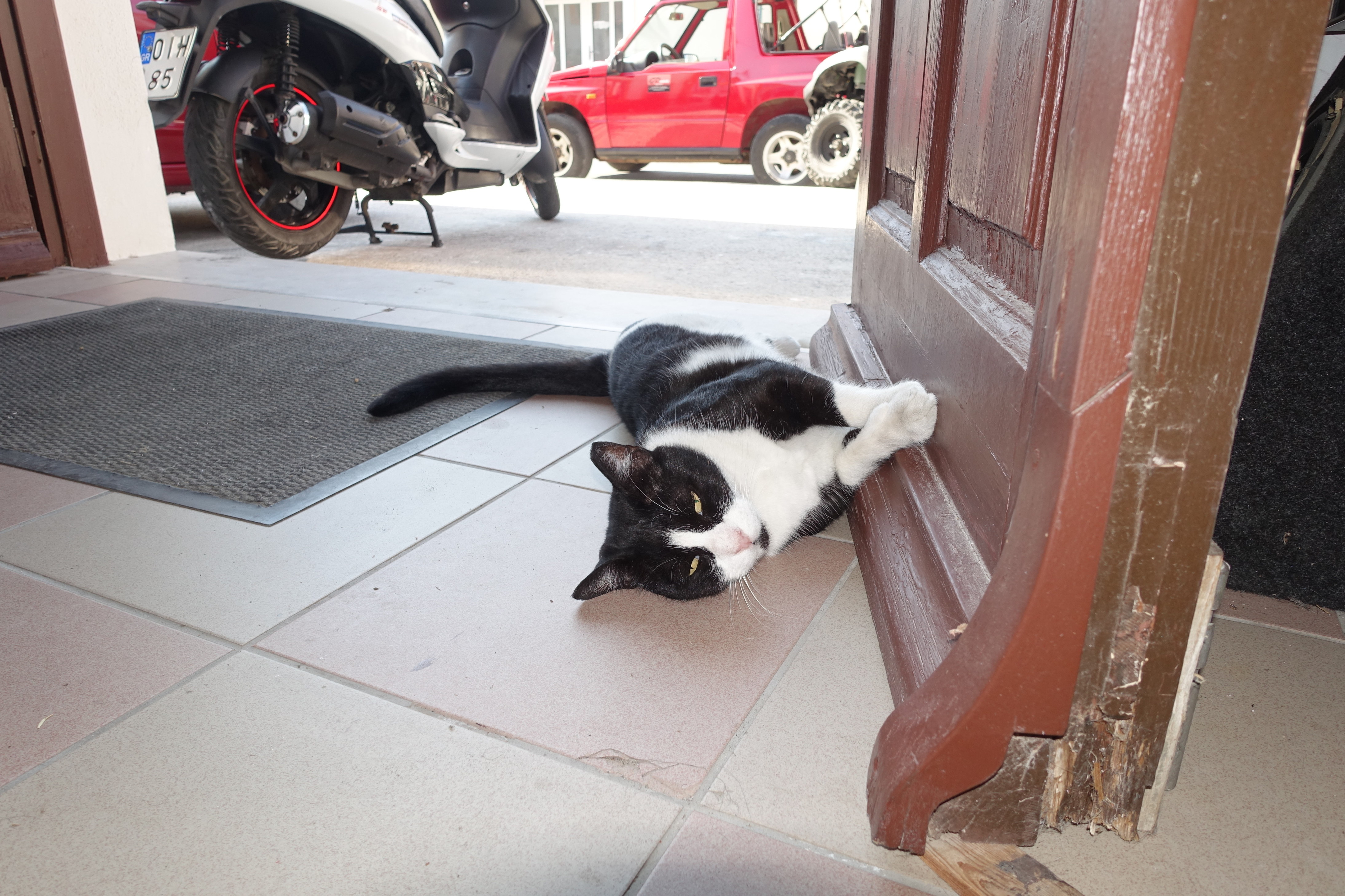 Samos-Greek-Cats36
