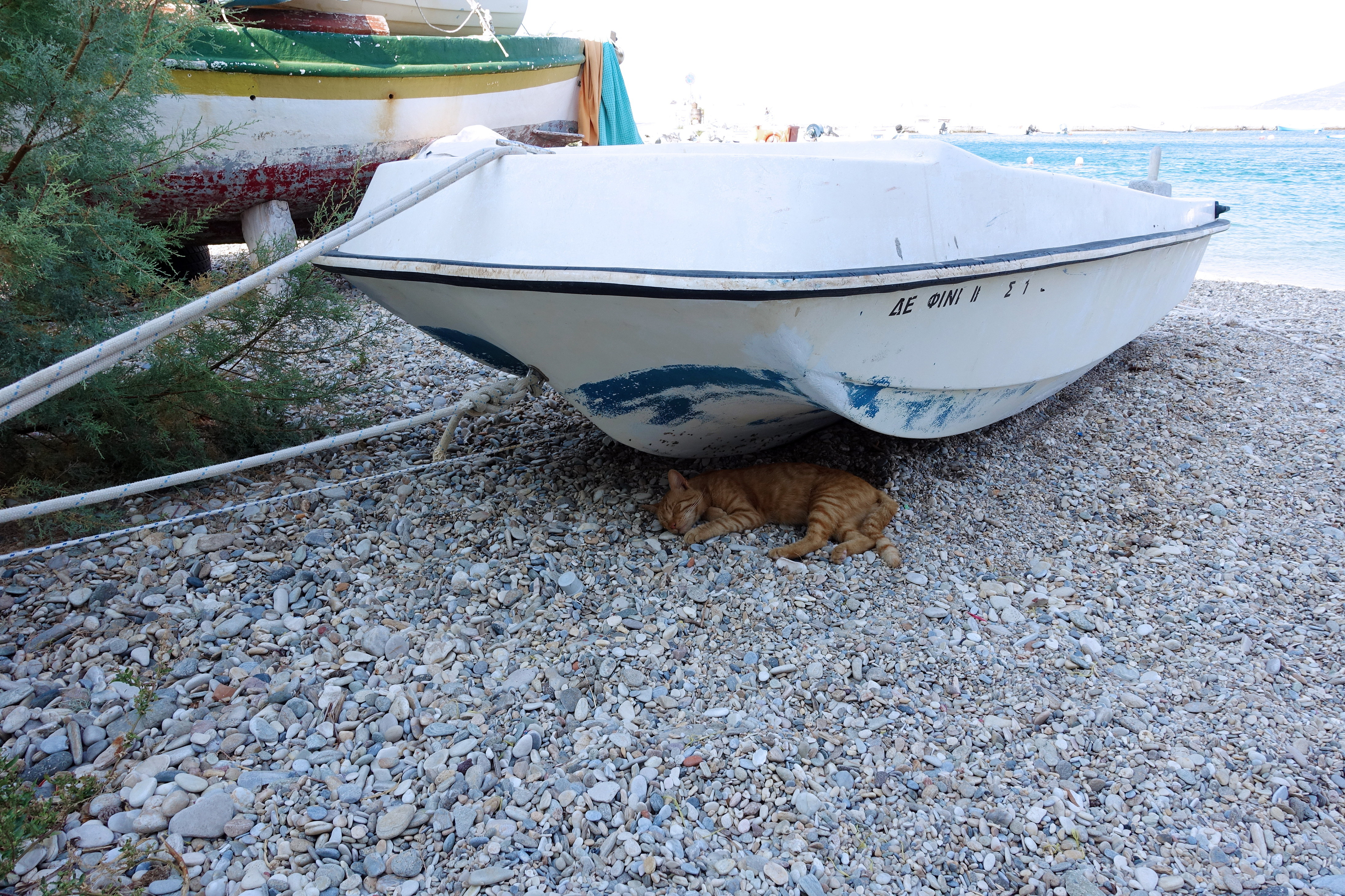 Samos-Greek-Cats37