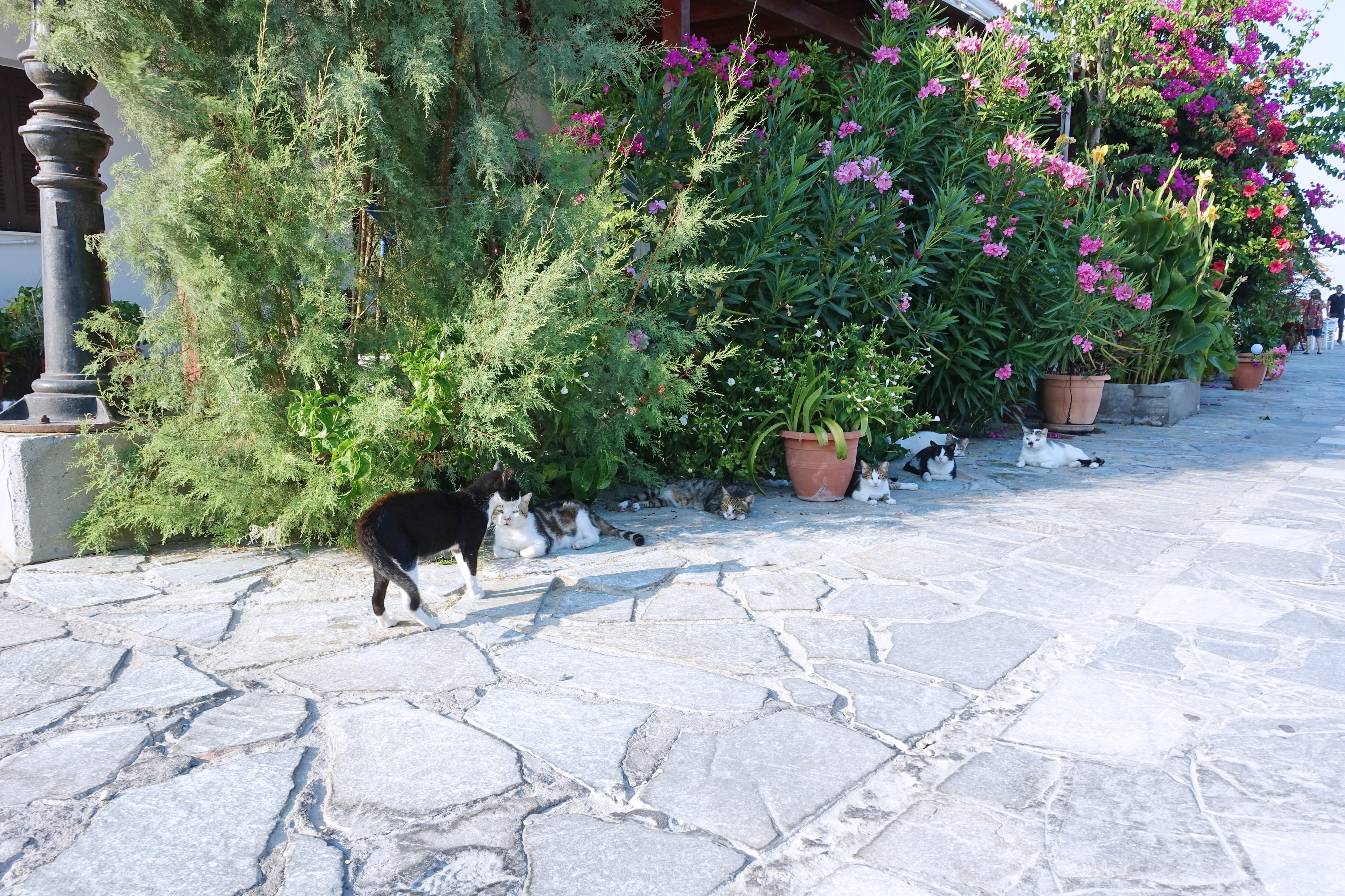 Samos-Greek-Cats38