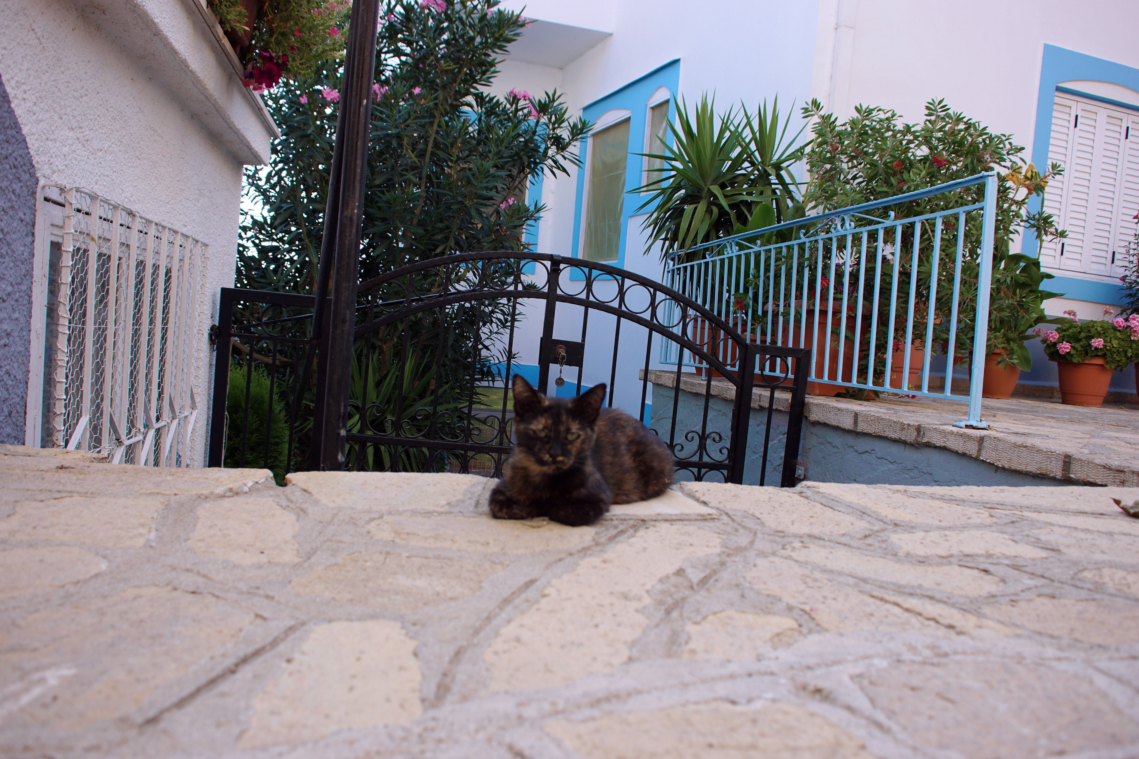 Samos-Greek-Cats42