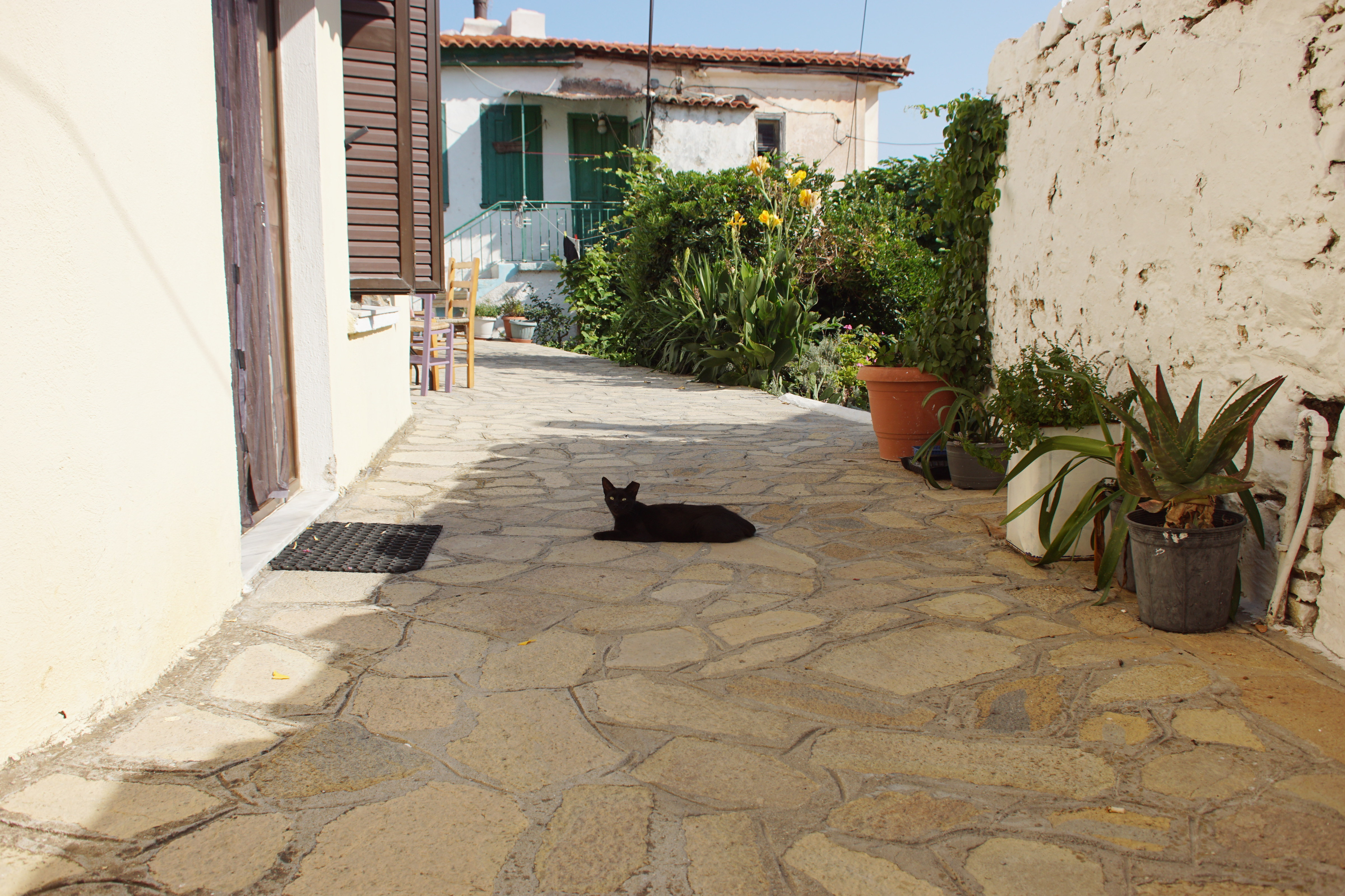 Samos-Greek-Cats45