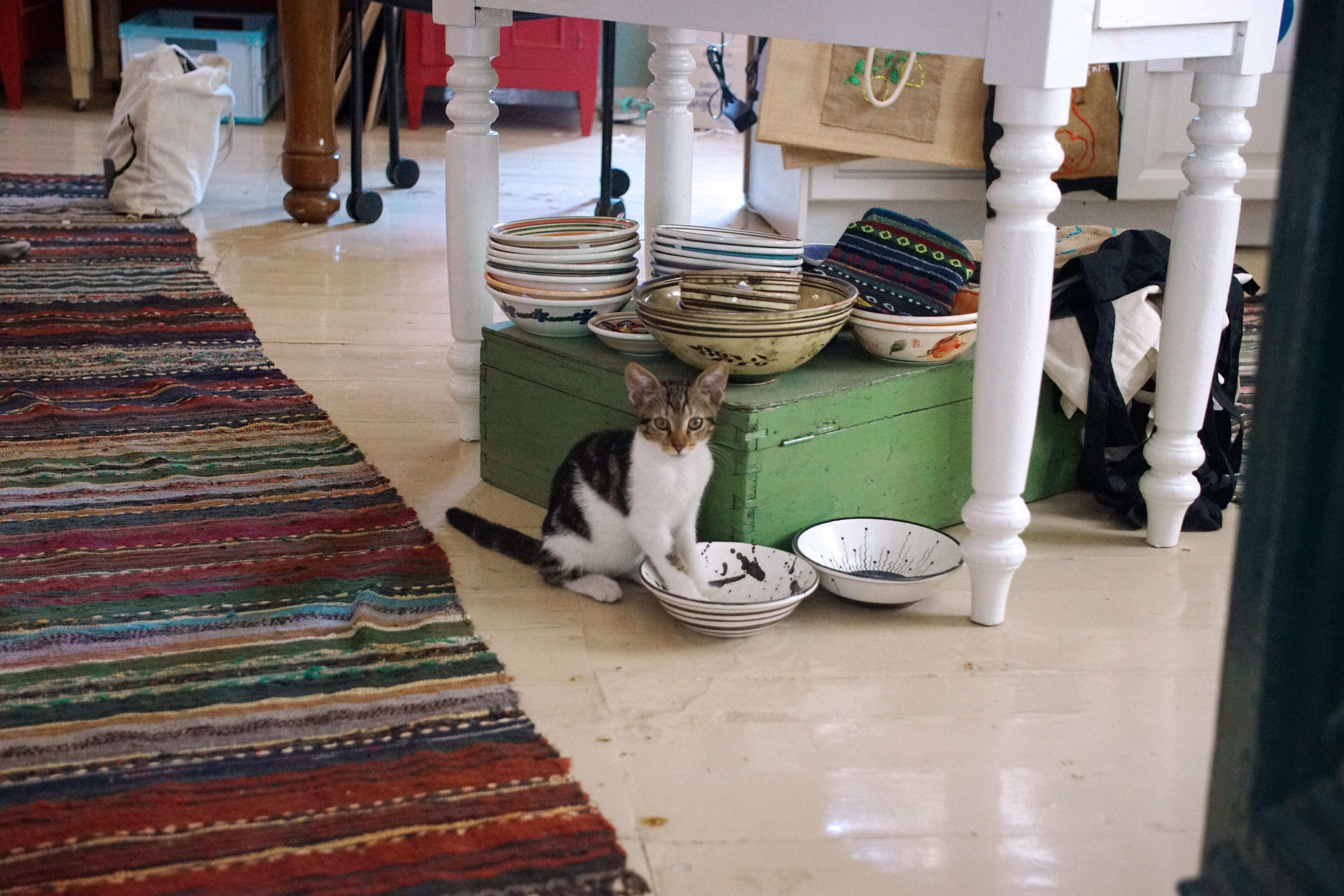 Samos-Greek-Cats49