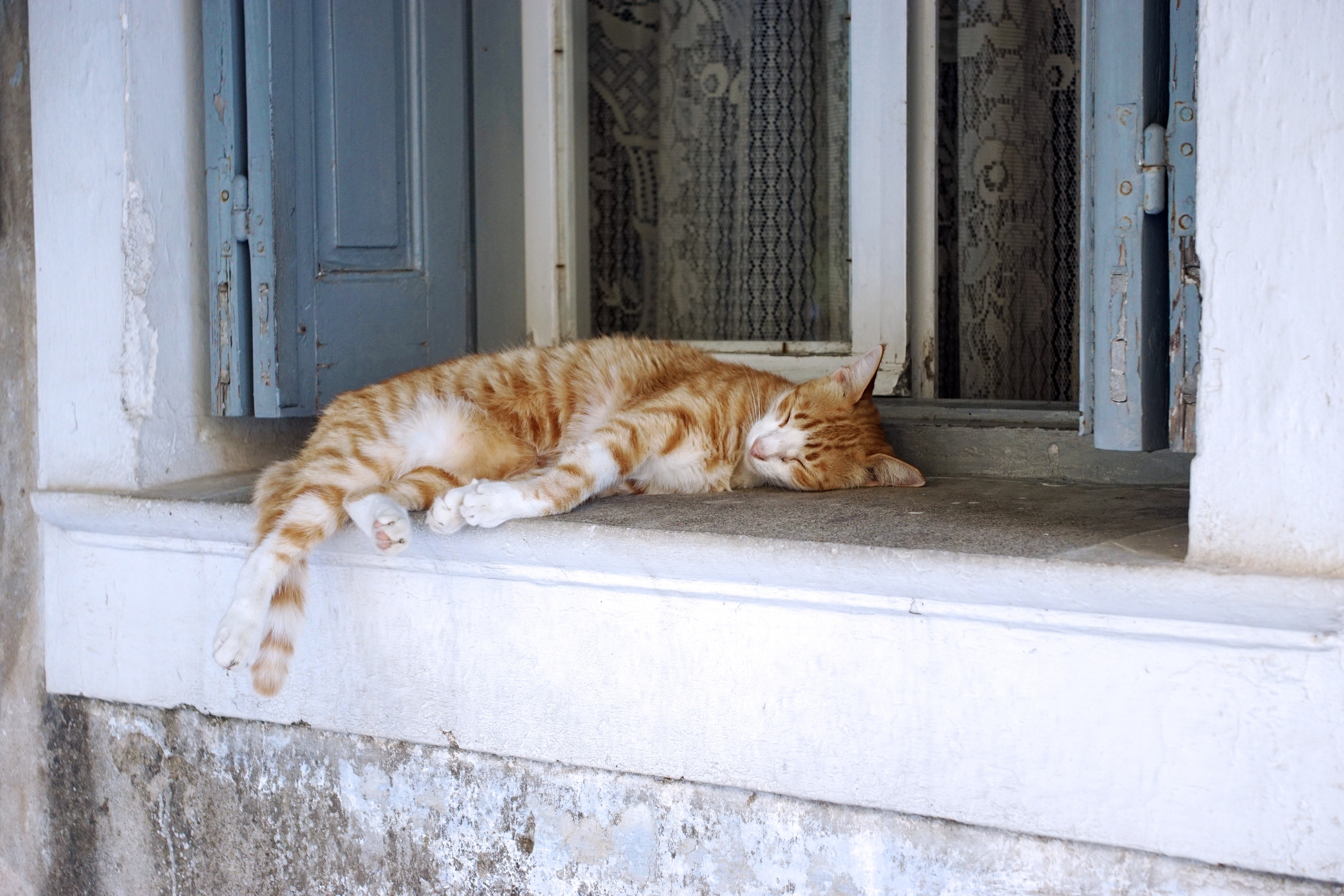 Samos-Greek-Cats54
