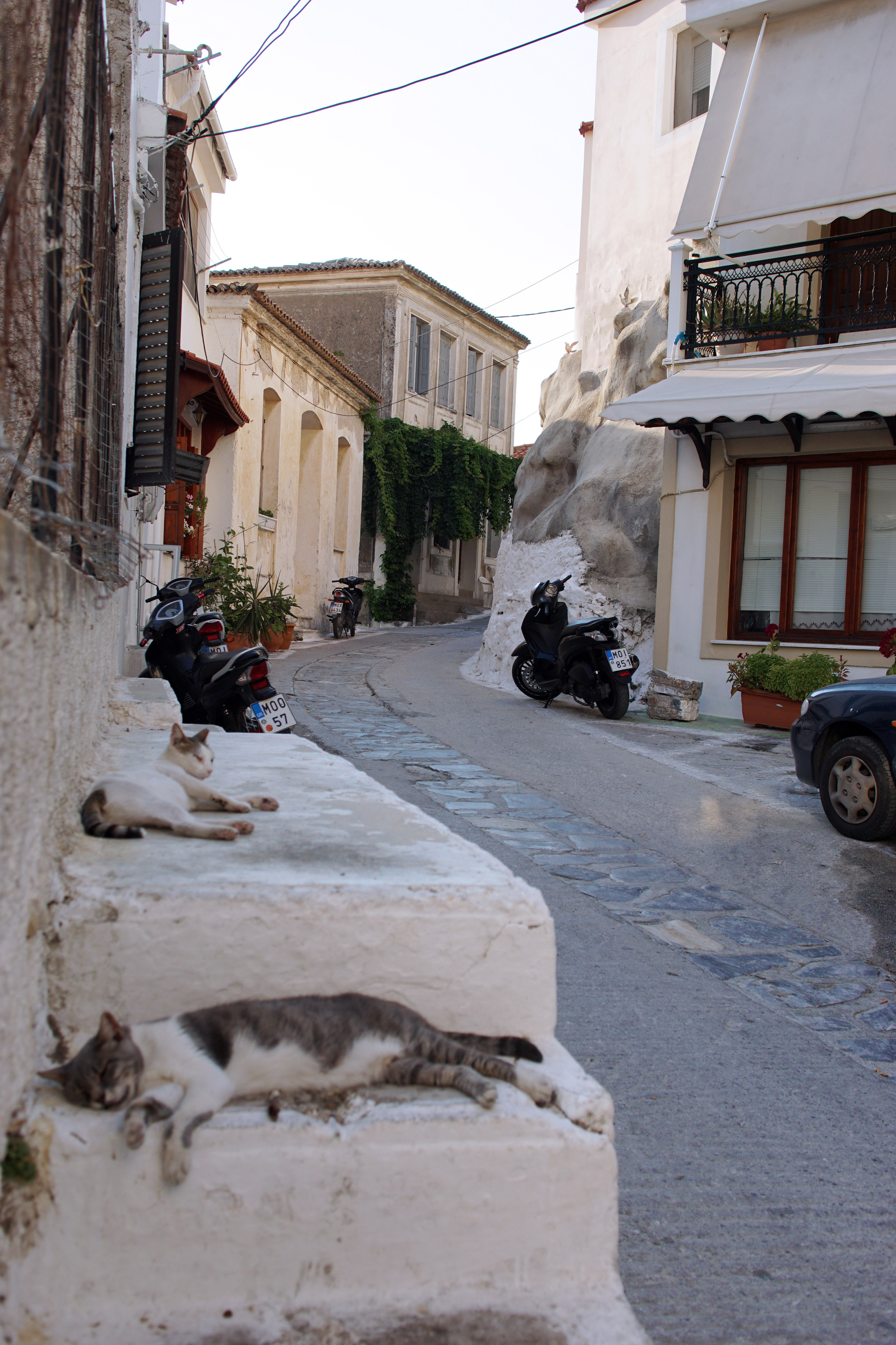 Samos-Greek-Cats55
