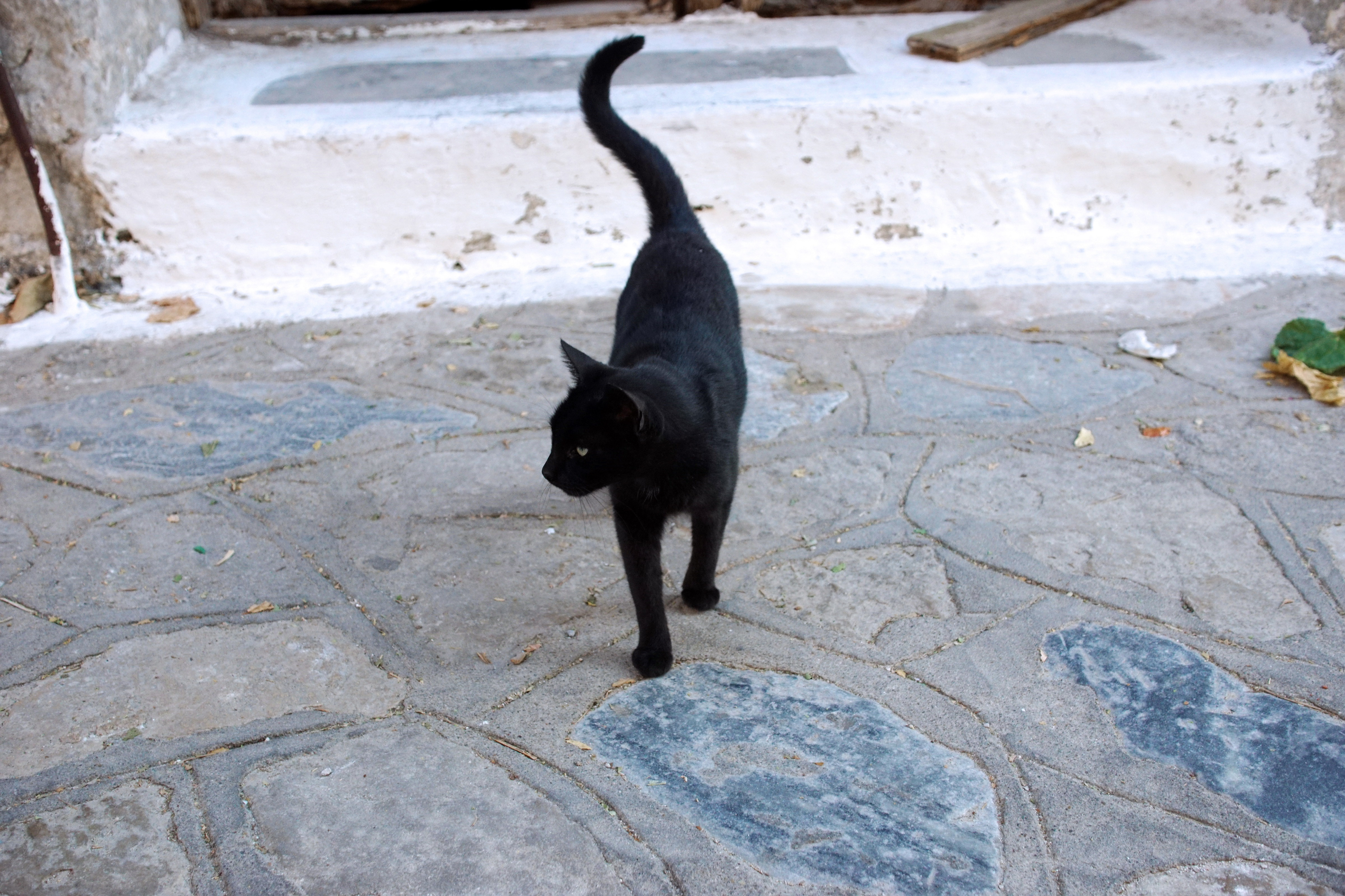 Samos-Greek-Cats59