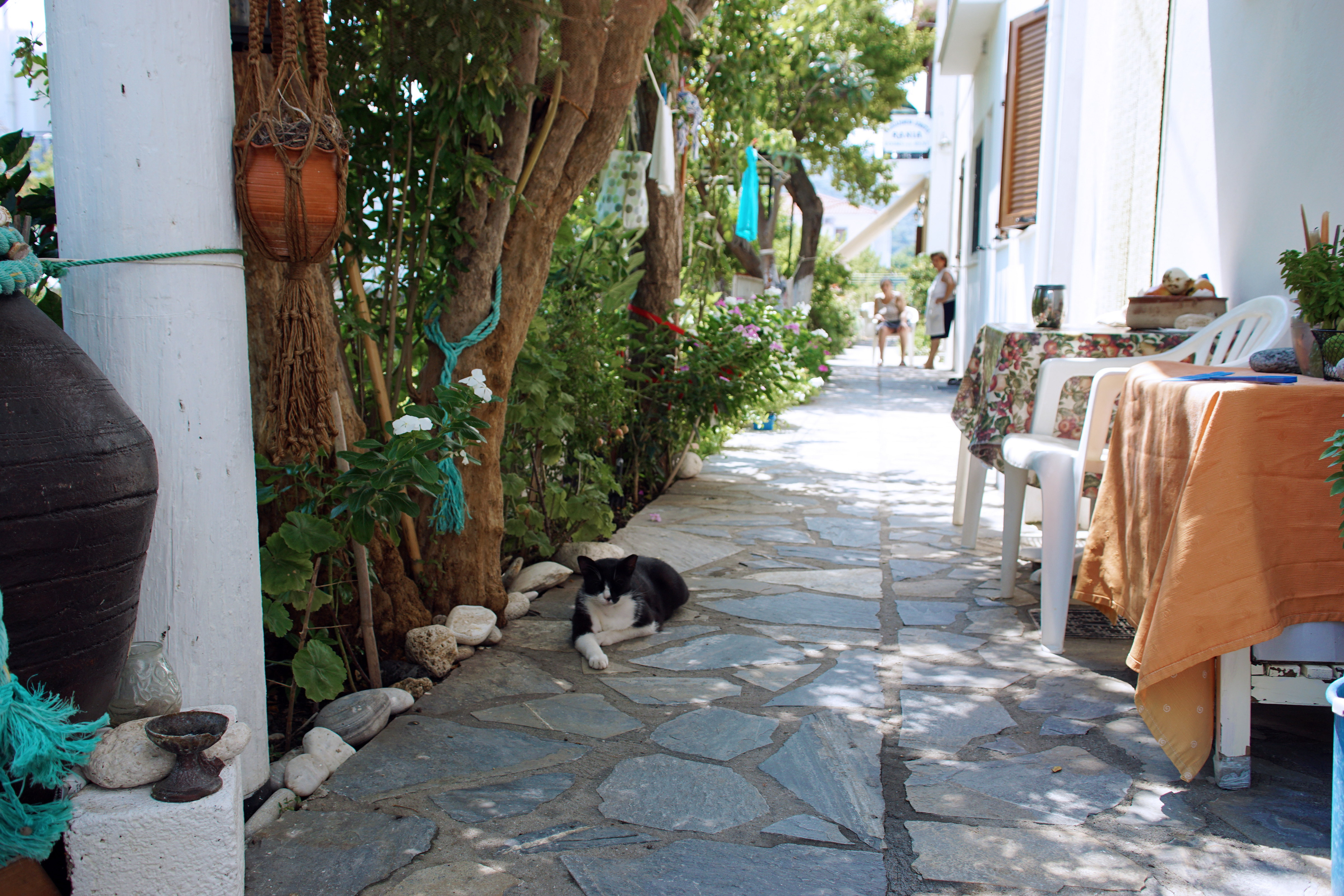 Samos-Greek-Cats62
