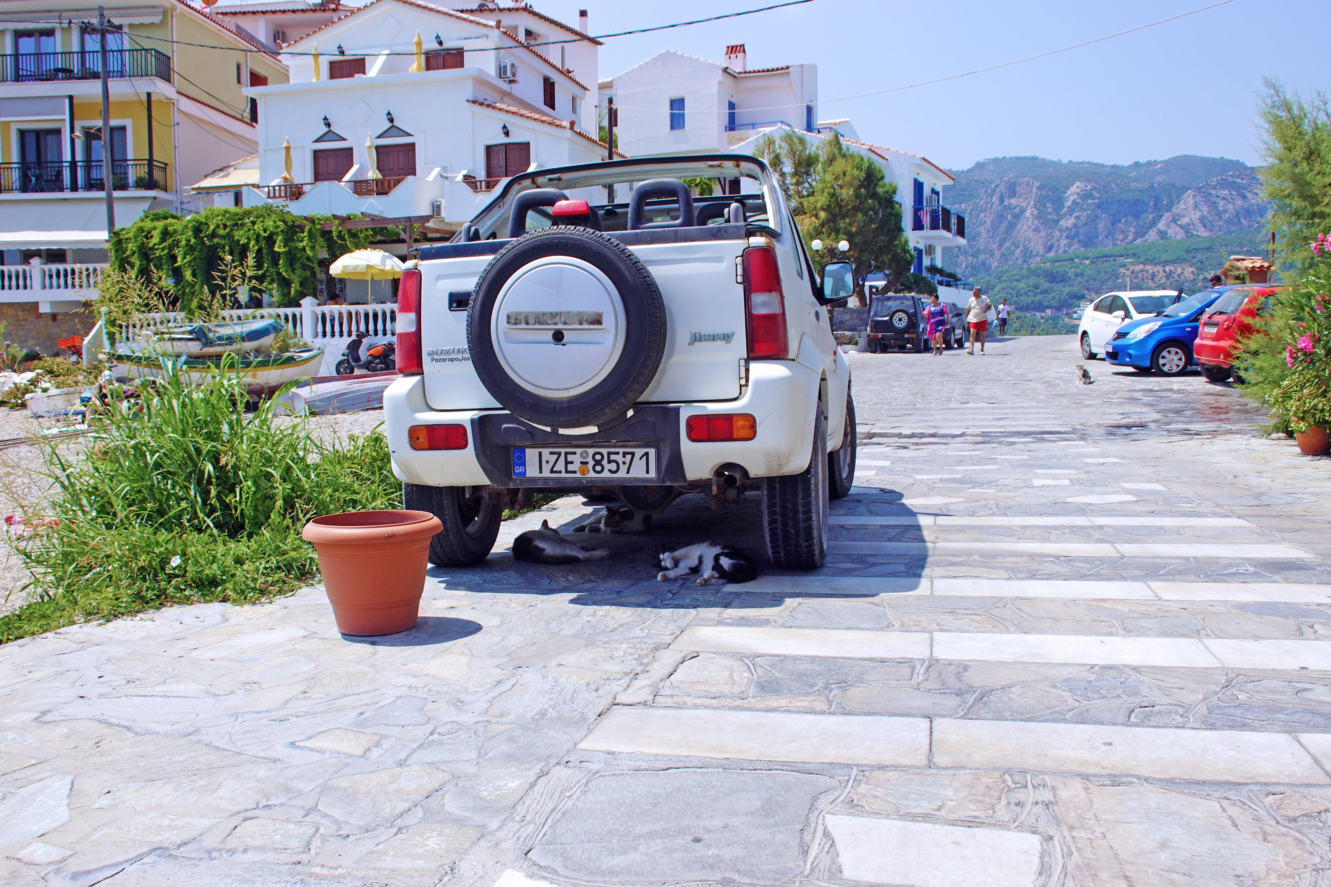 Samos-Greek-Cats63