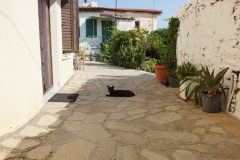 Samos-Greek-Cats45