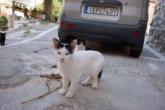 Samos-Greek-Cats47