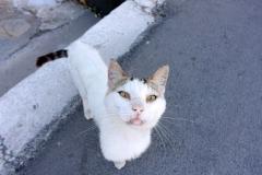Samos-Greek-Cats50