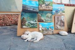 Samos-Greek-Cats53