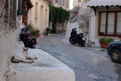 Samos-Greek-Cats55
