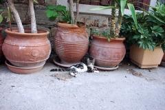 Samos-Greek-Cats56