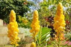 Broomrape, a parasitic plant.