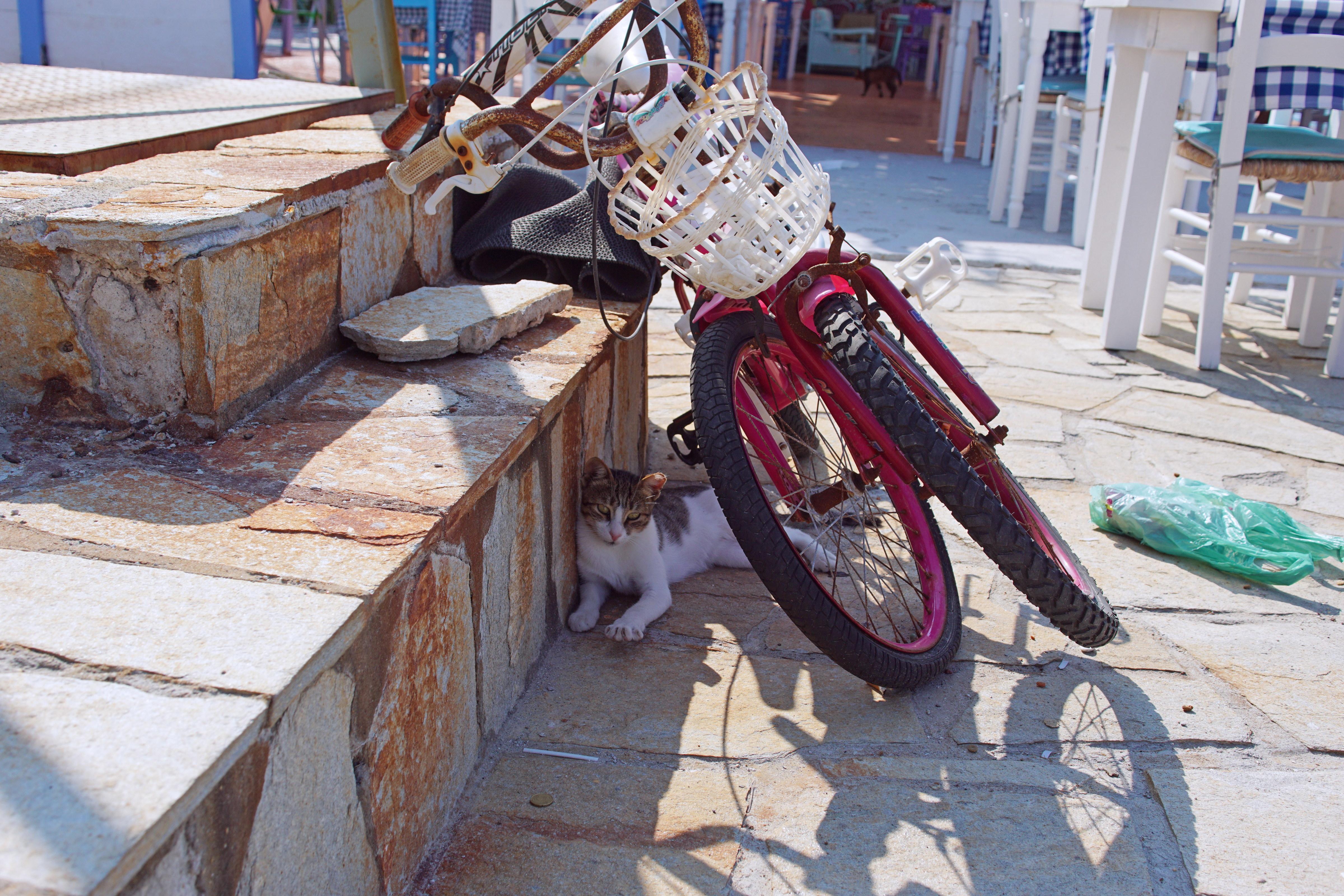 Samos-Greek-Cats02