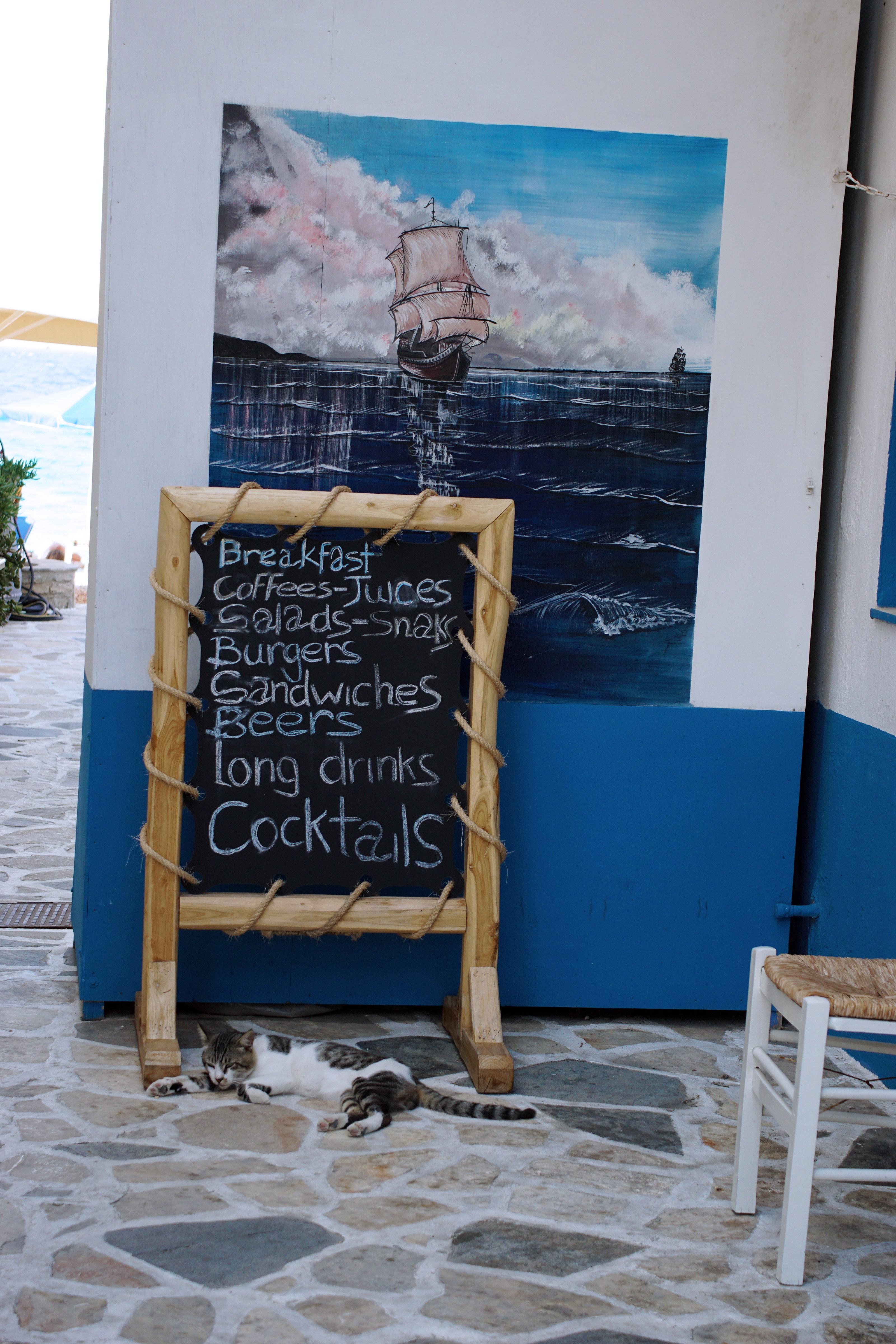 Samos-Greek-Cats07
