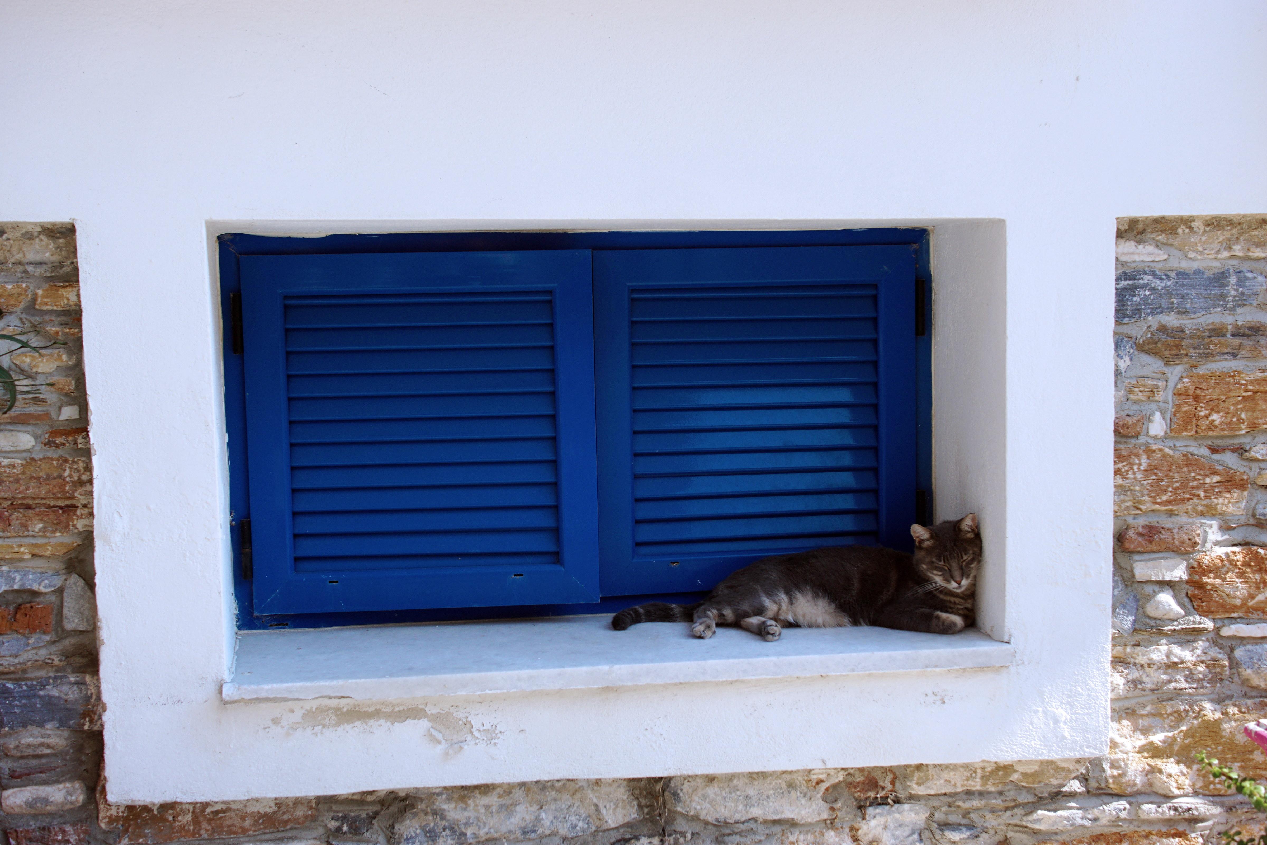 Samos-Greek-Cats10