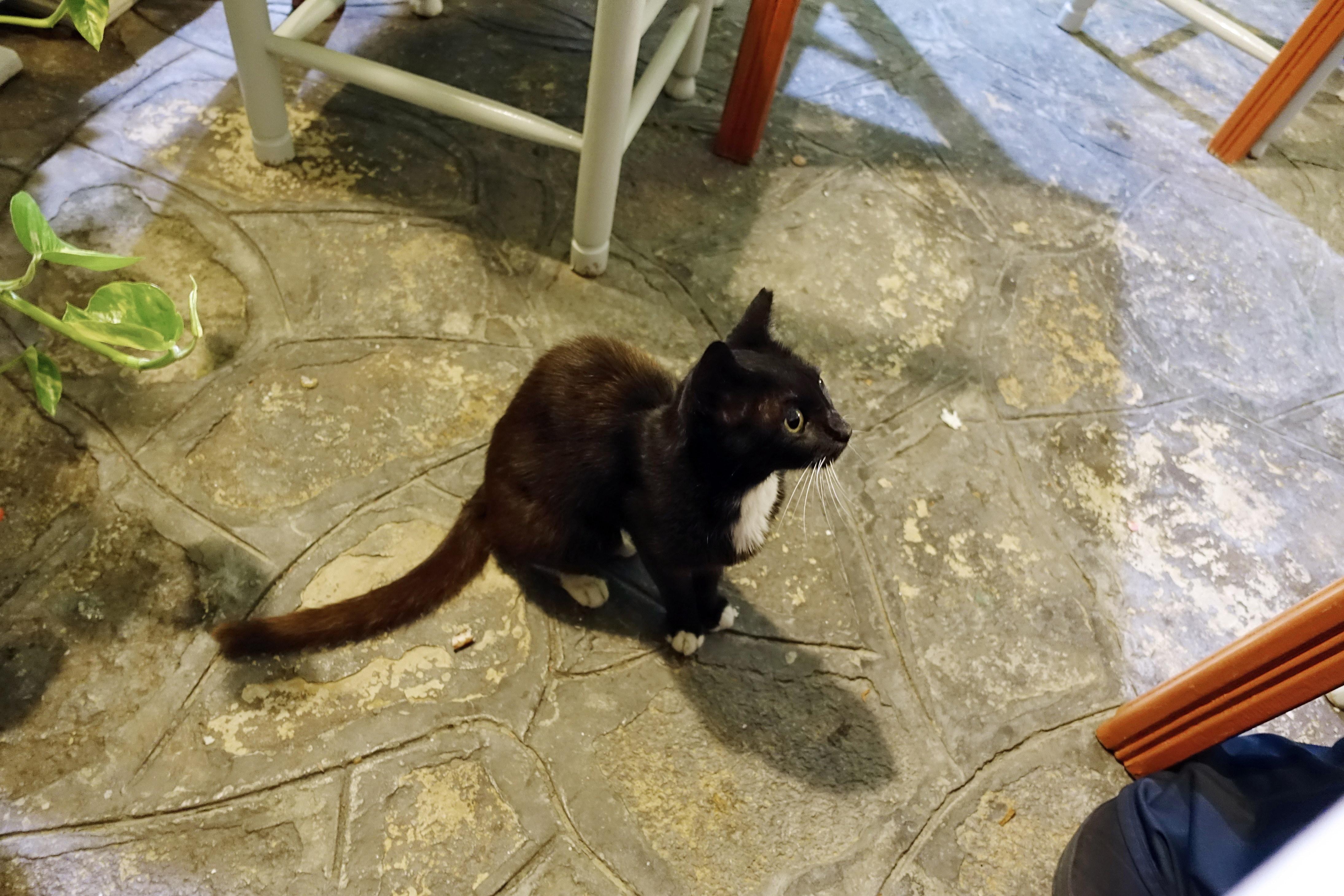 Samos-Greek-Cats16