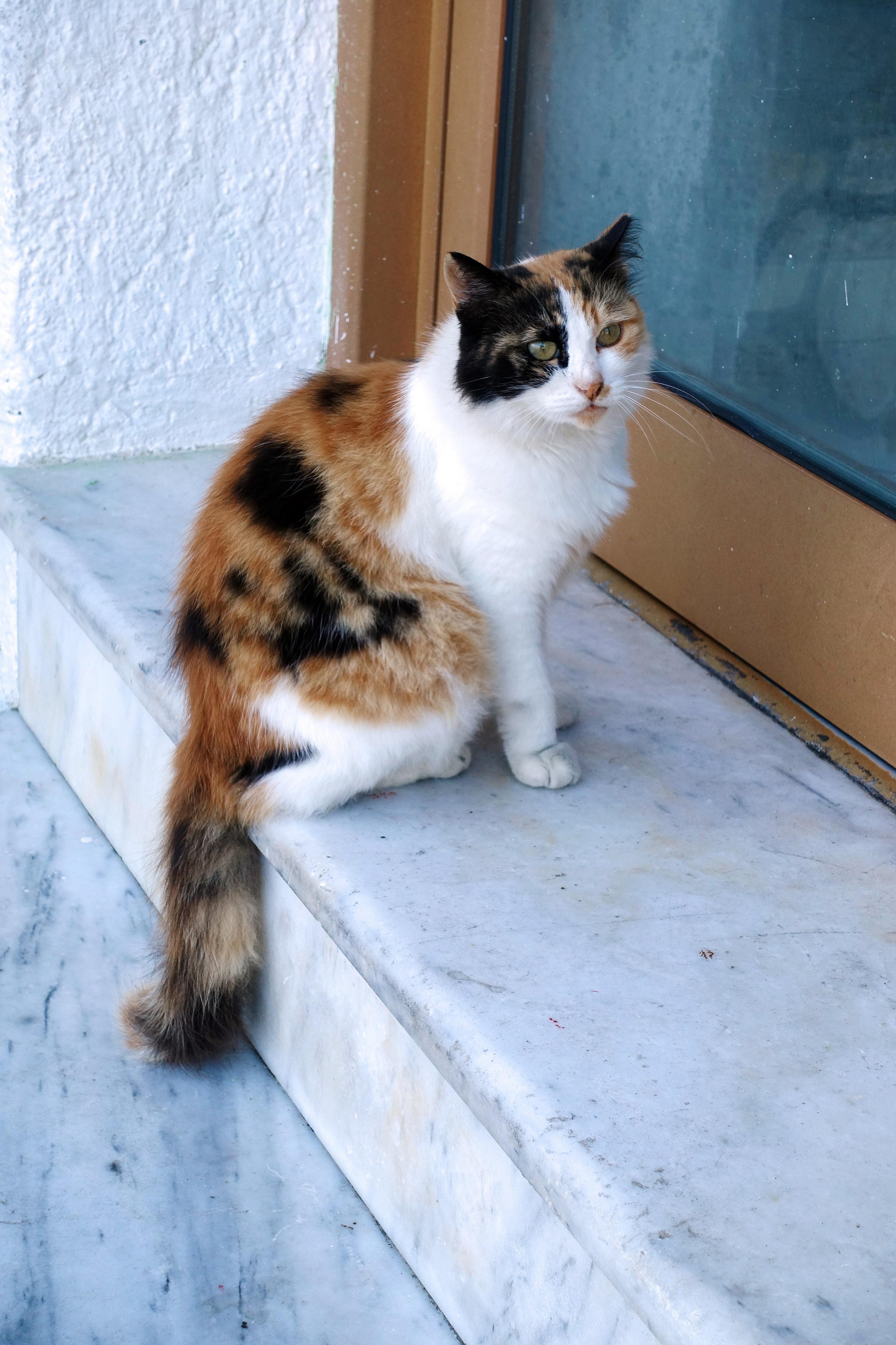 Samos-Greek-Cats18
