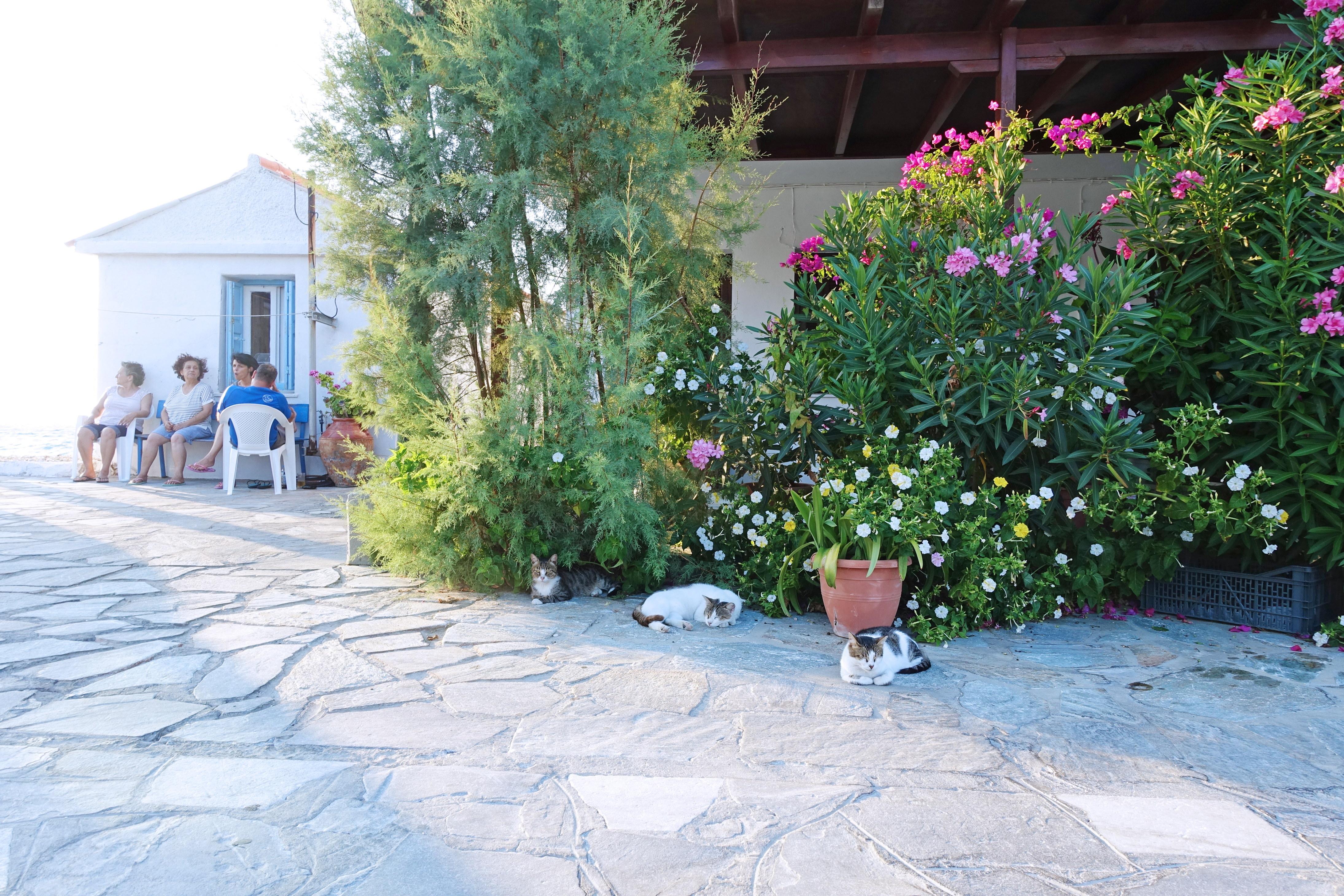 Samos-Greek-Cats20