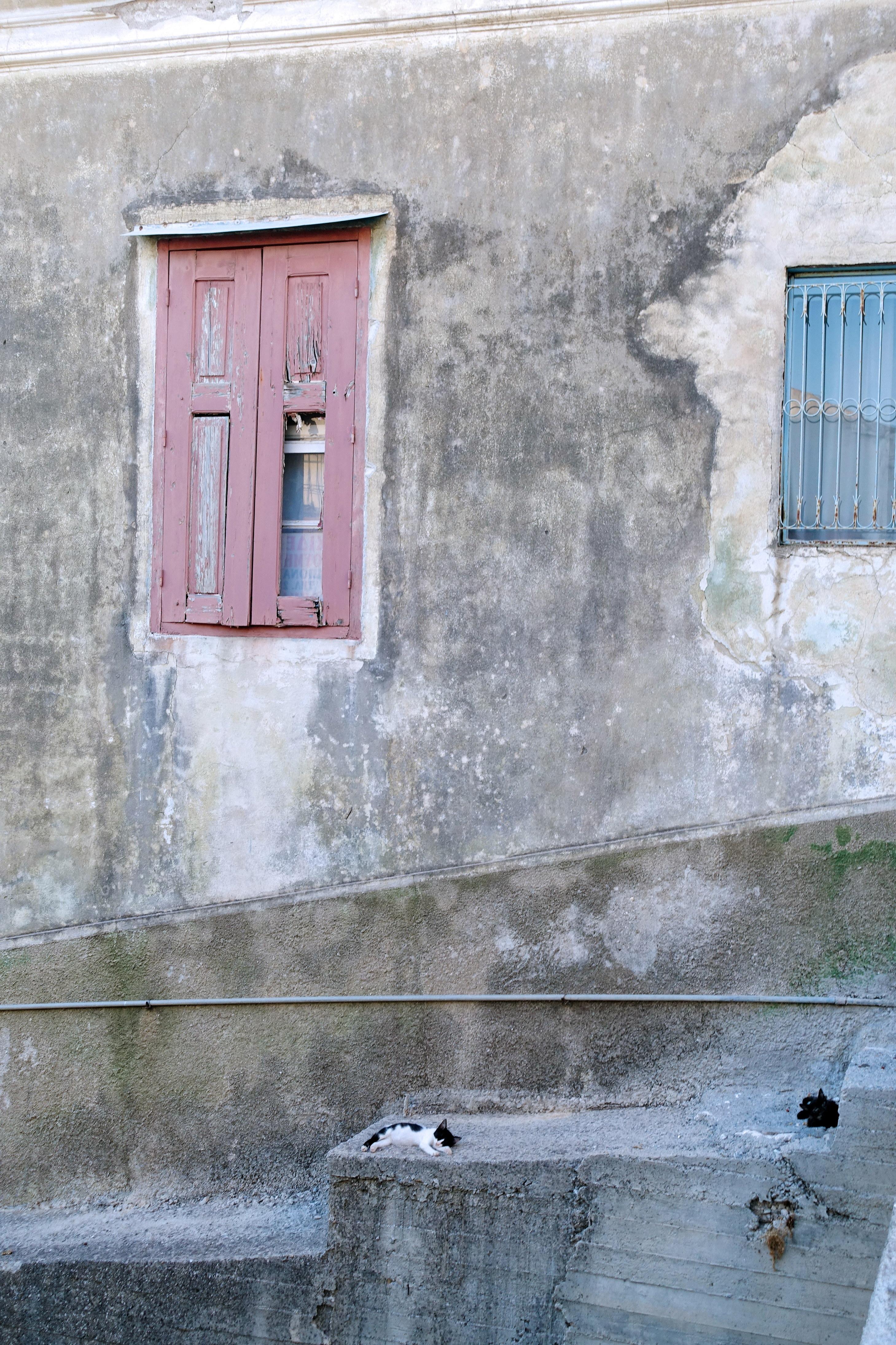 Samos-Greek-Cats23