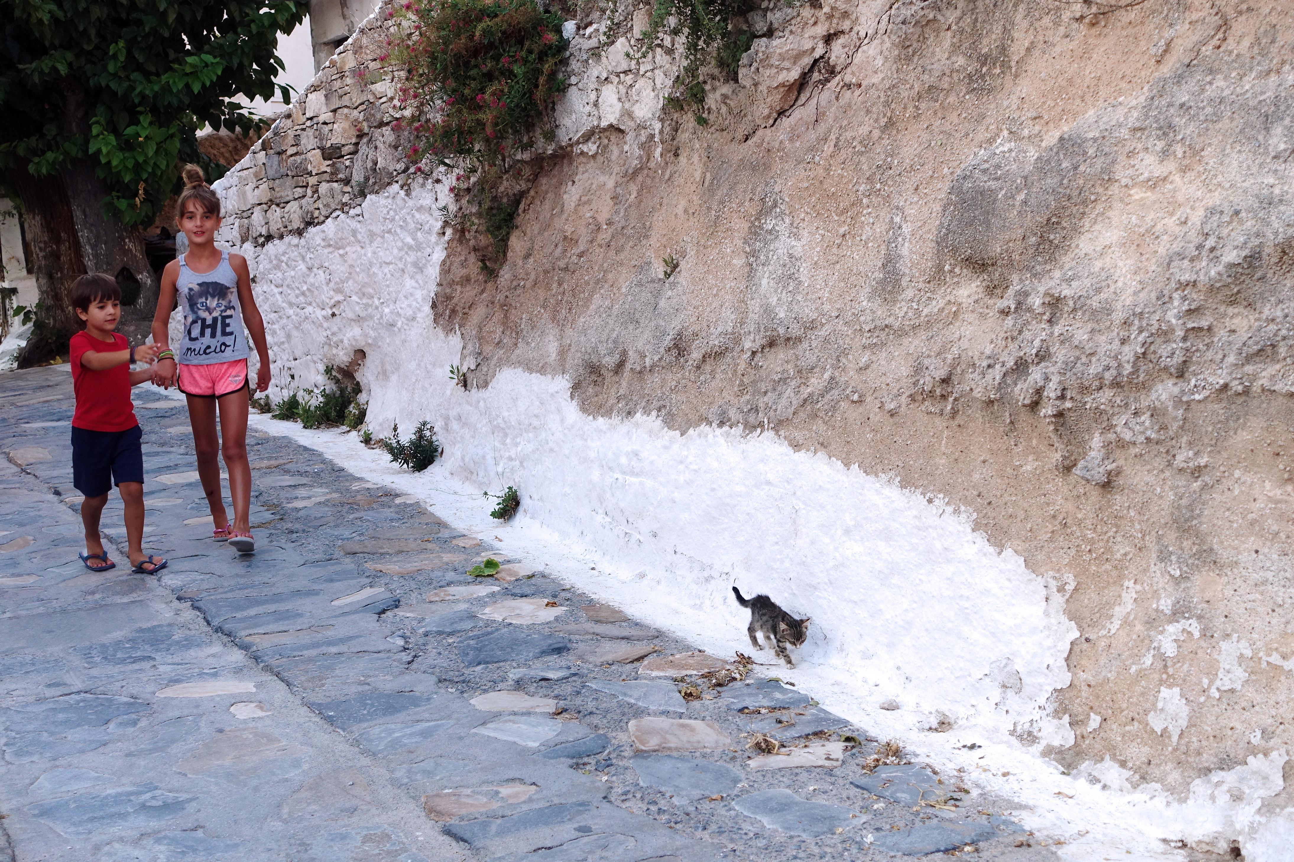 Samos-Greek-Cats25