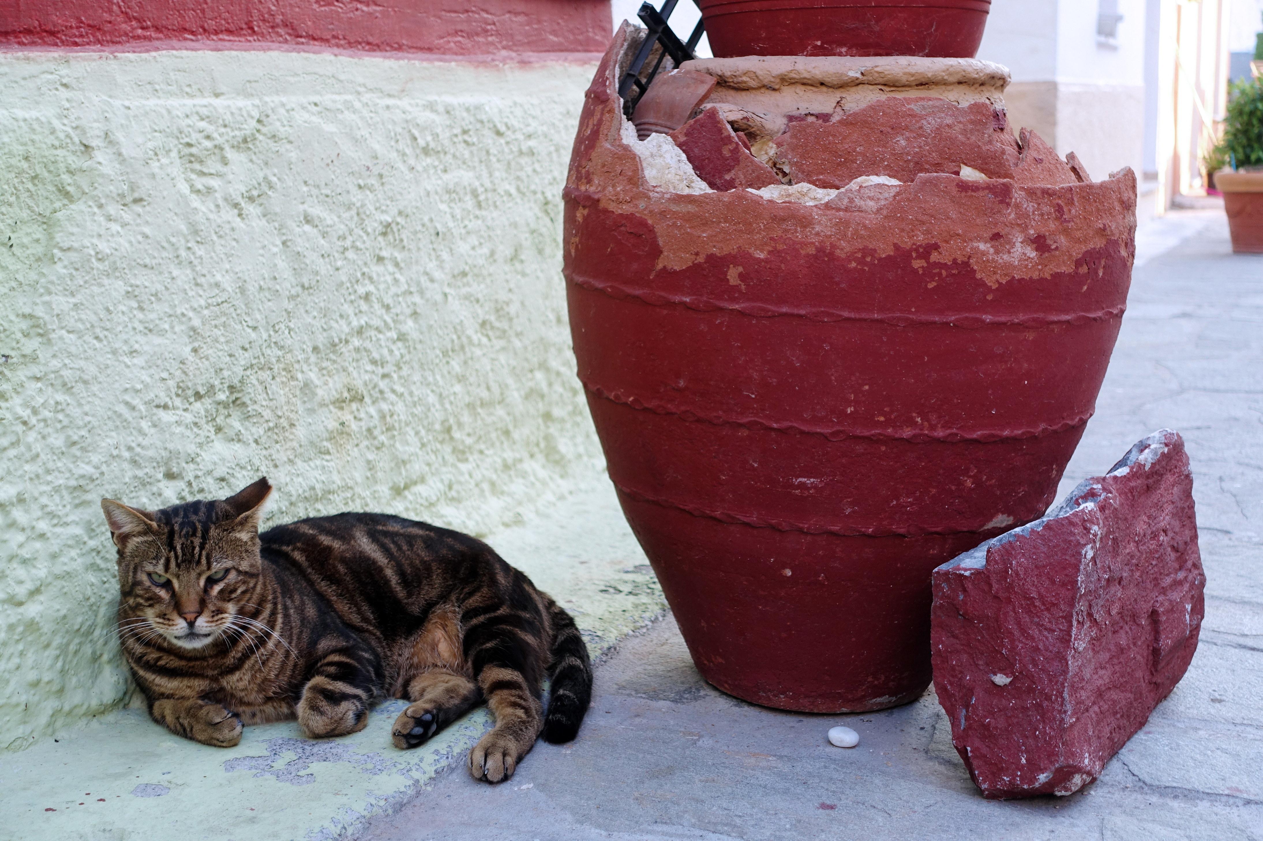 Samos-Greek-Cats28