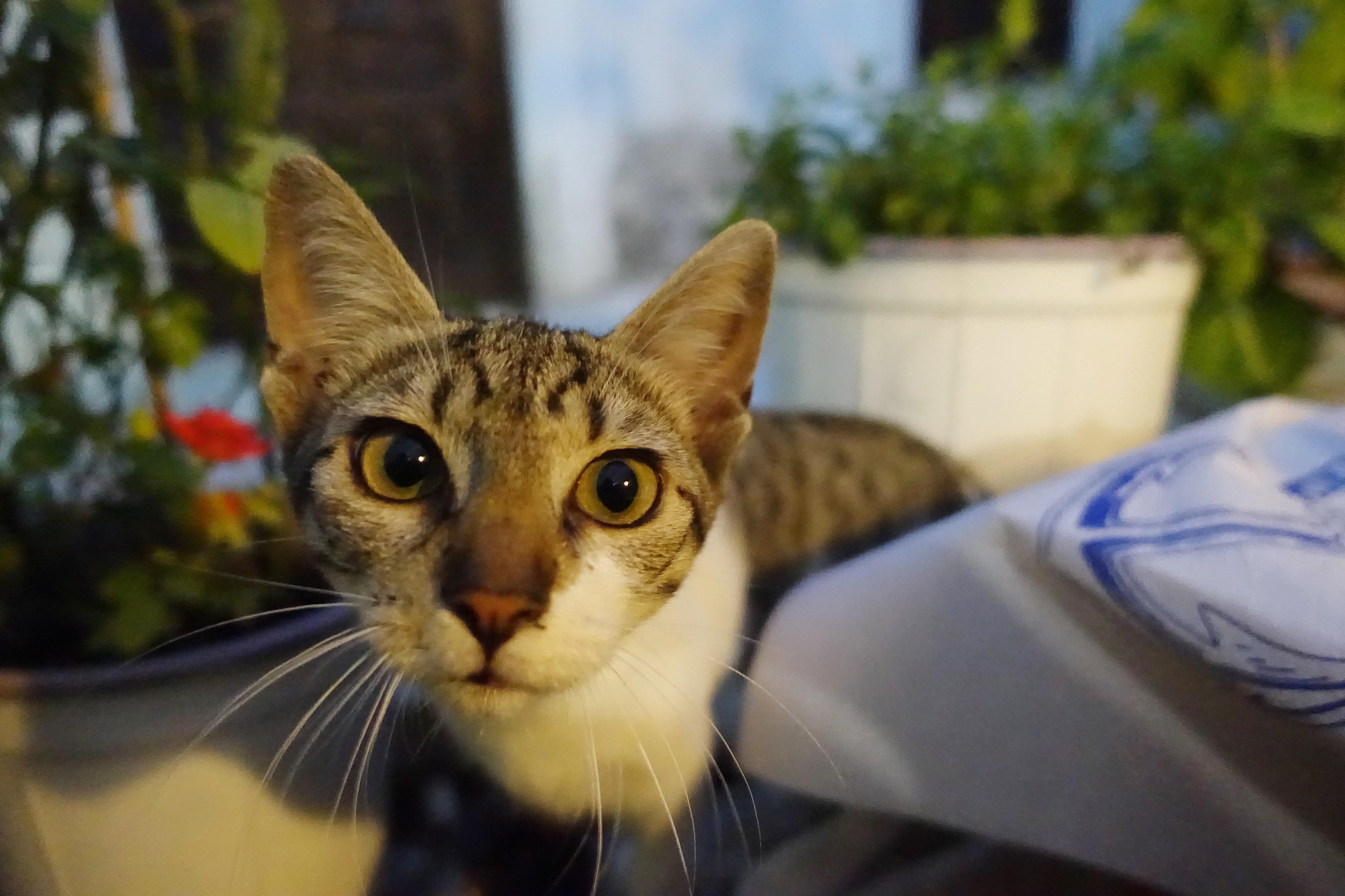 Samos-Greek-Cats29