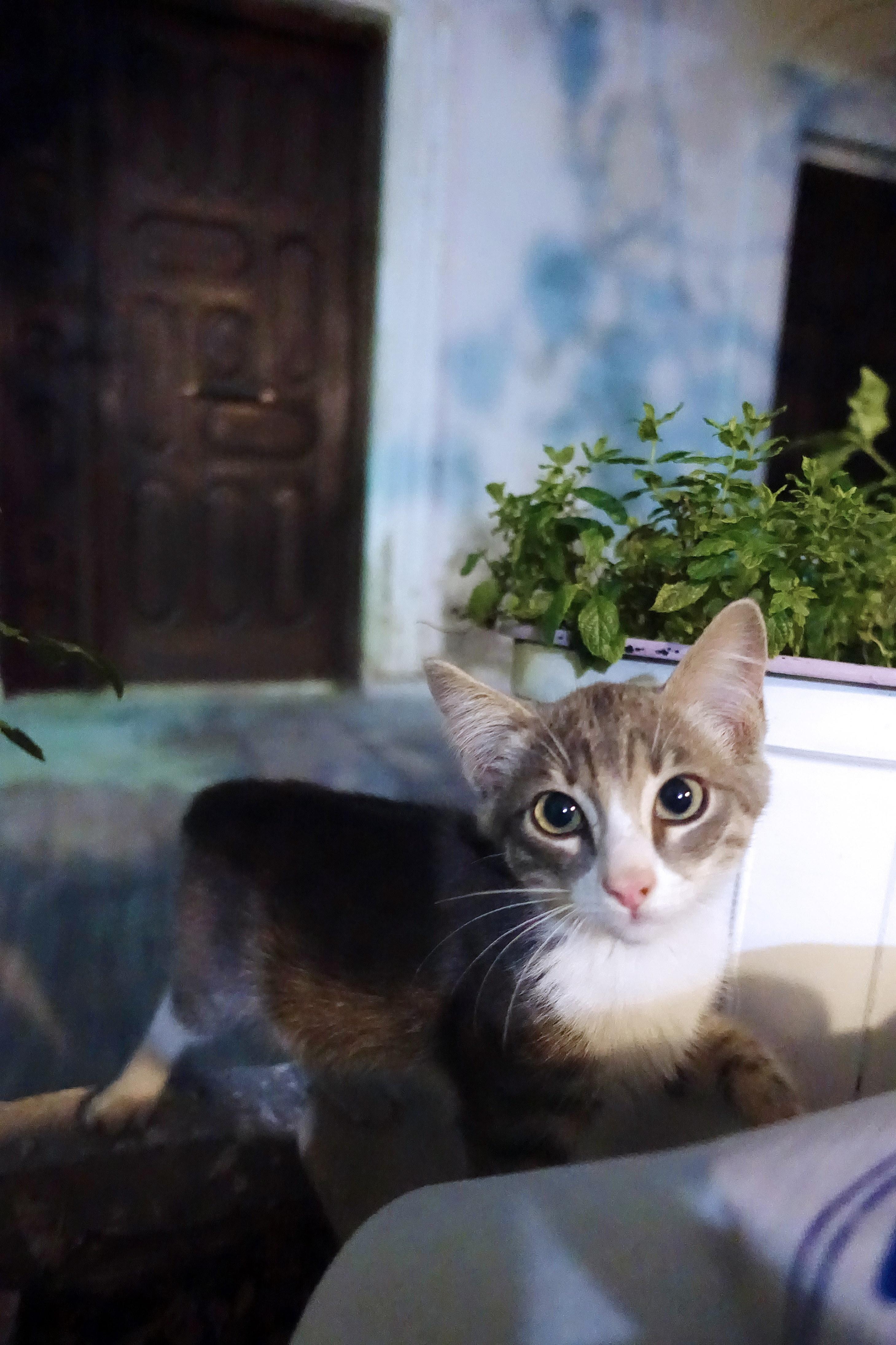Samos-Greek-Cats30