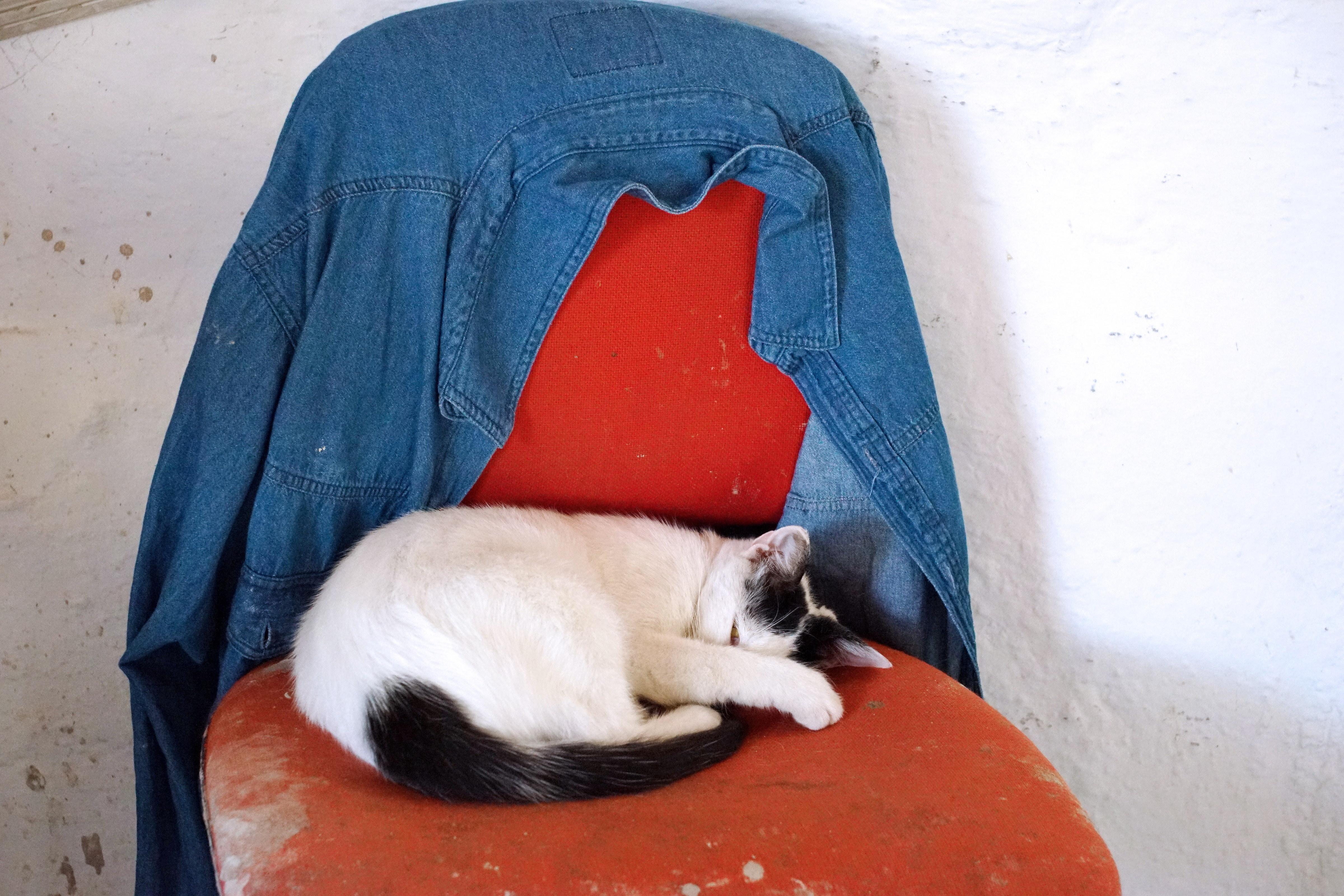 Samos-Greek-Cats39