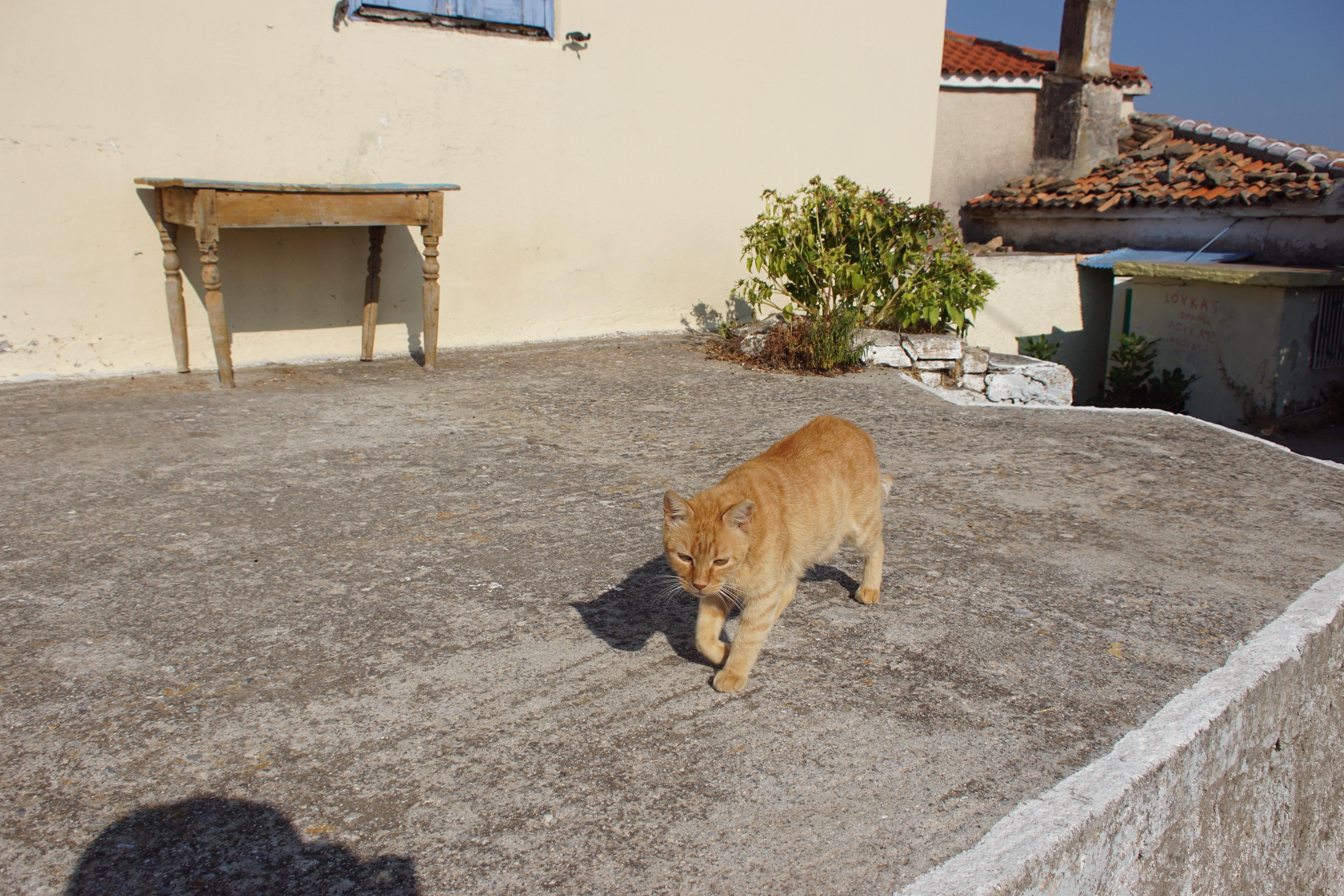 Samos-Greek-Cats41
