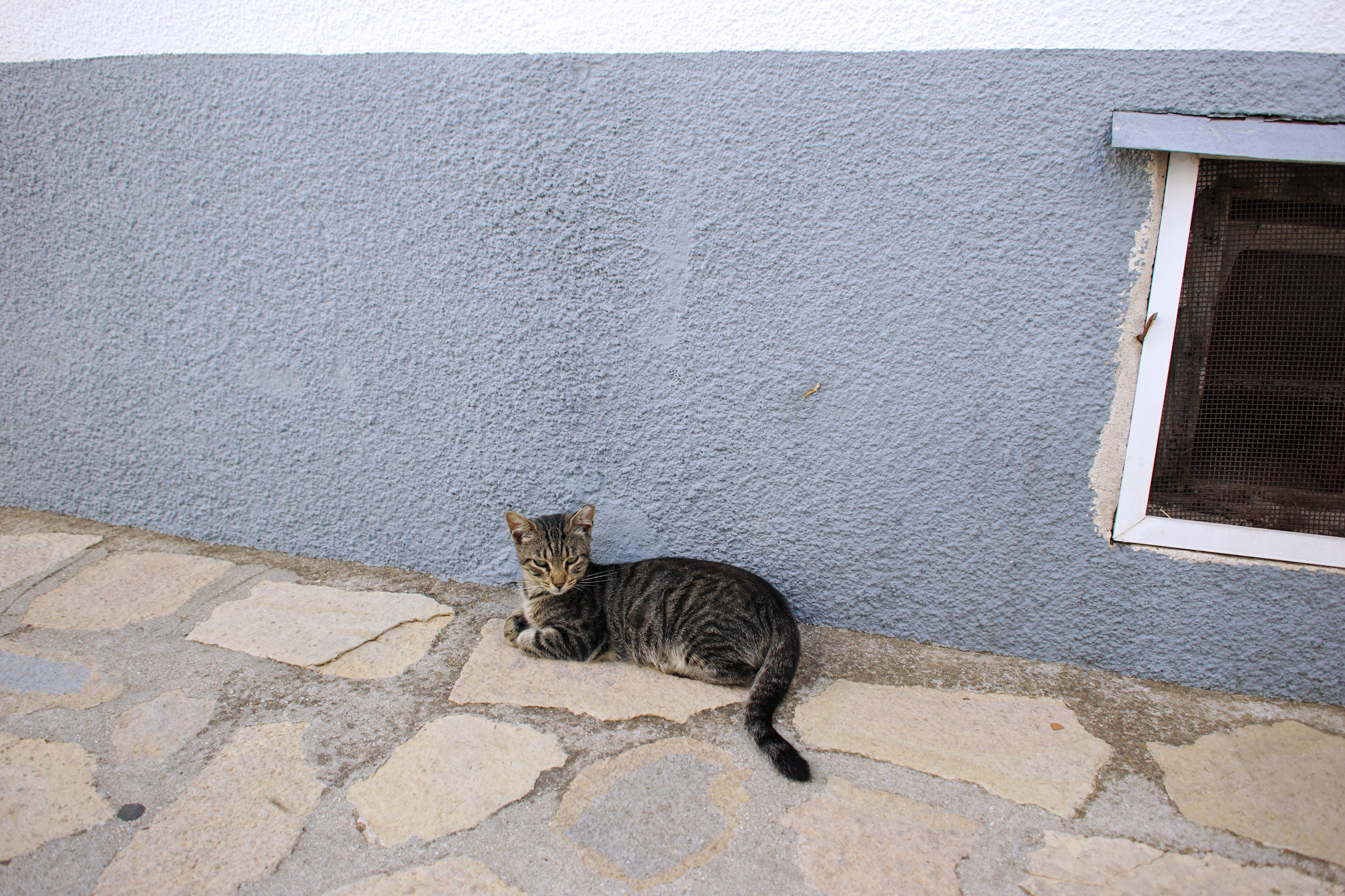 Samos-Greek-Cats44